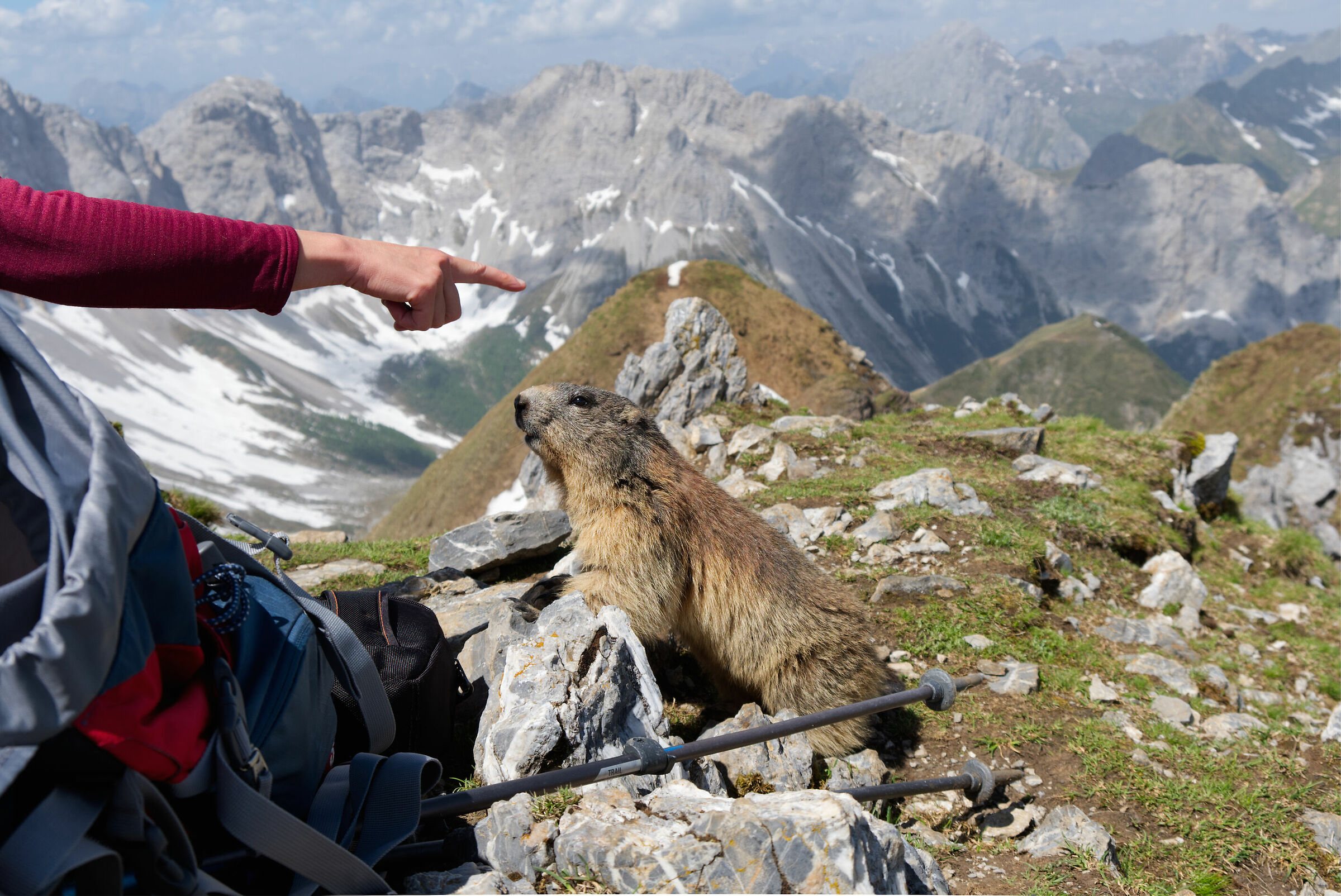 Marmot ...