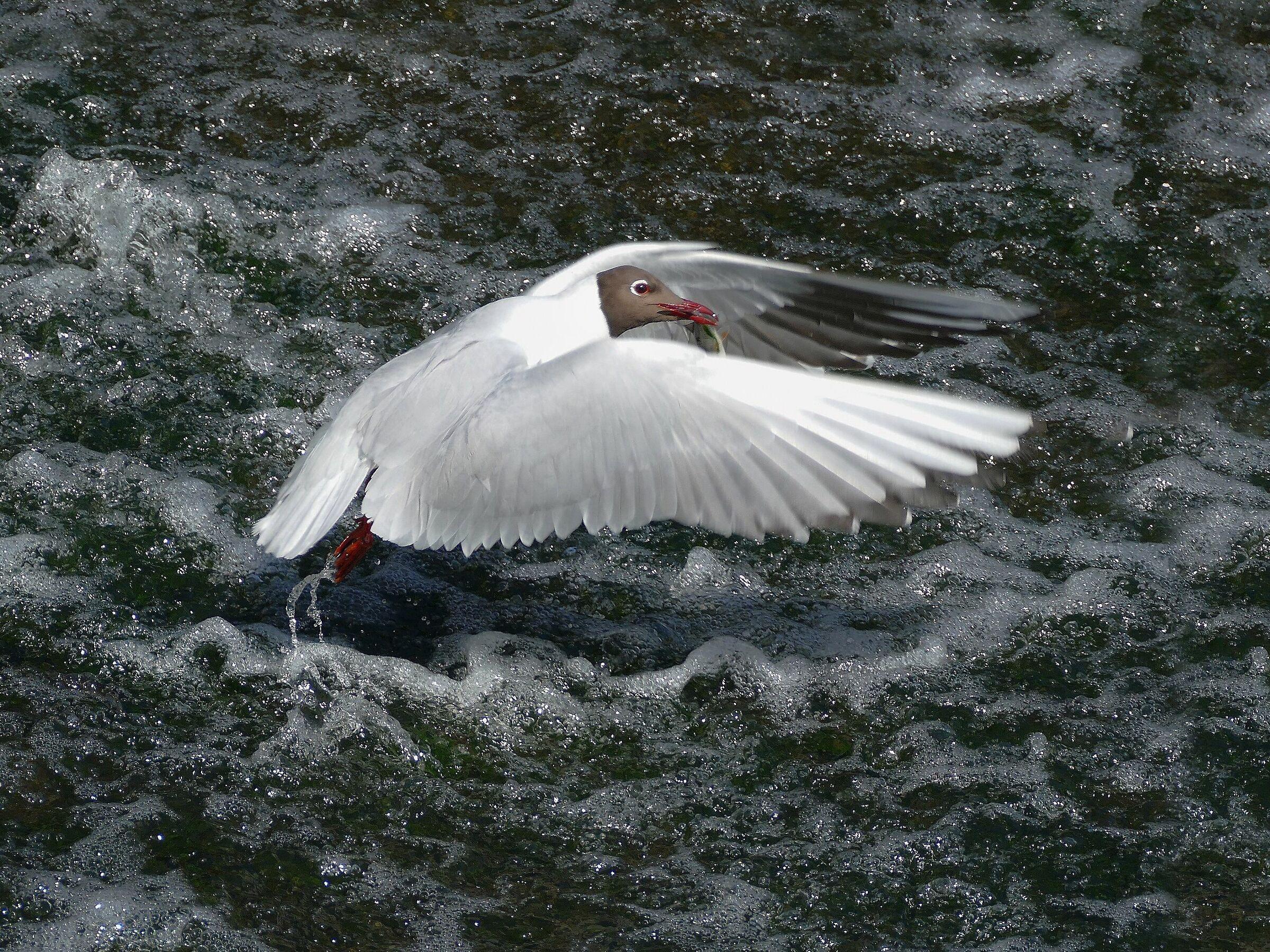 Seagull...