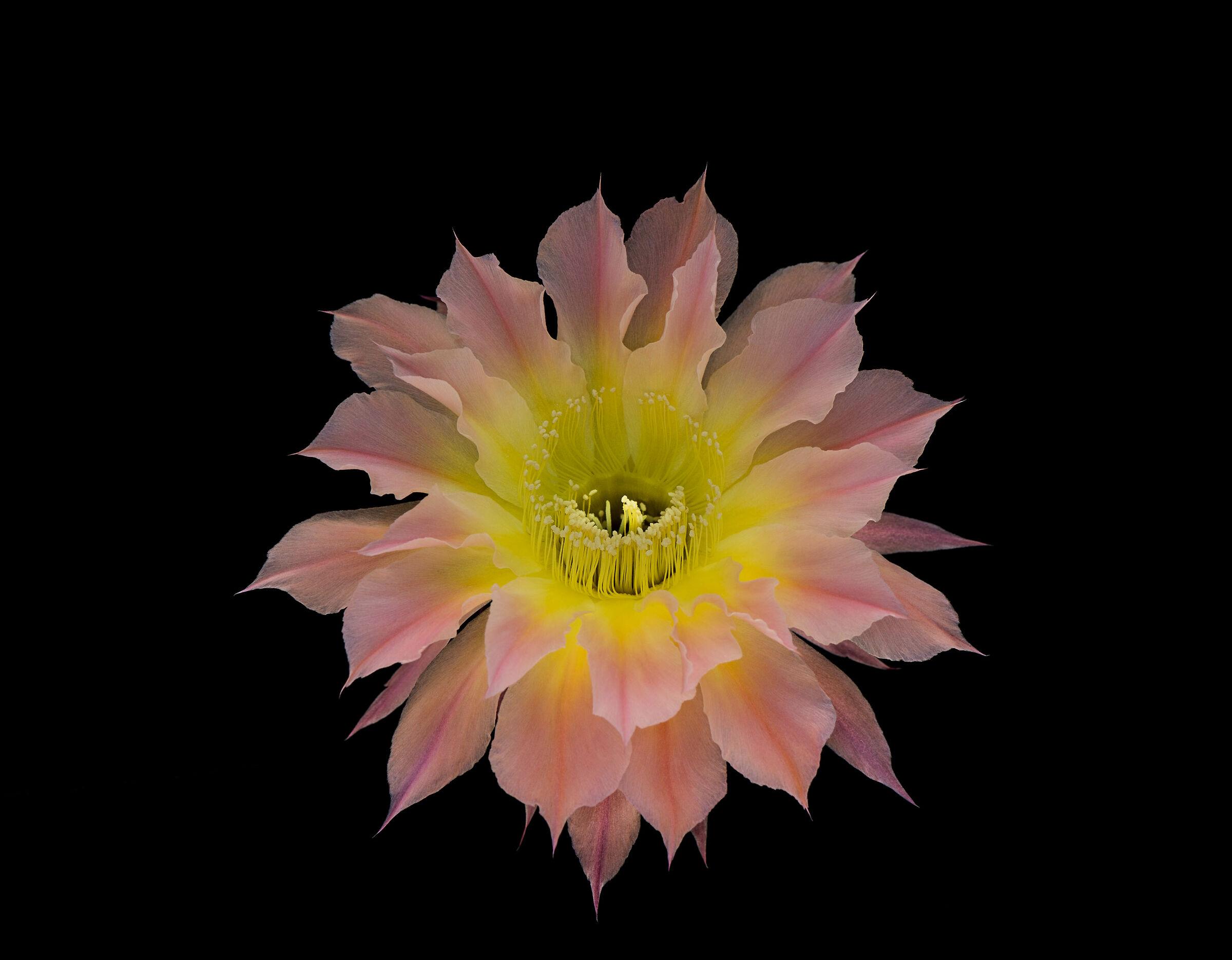 Cactus flower....