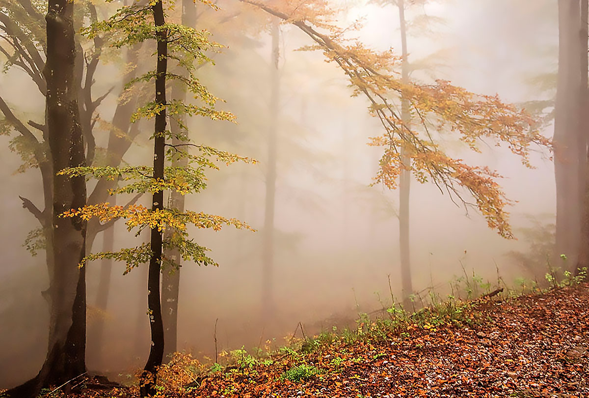 waiting for autumn ...