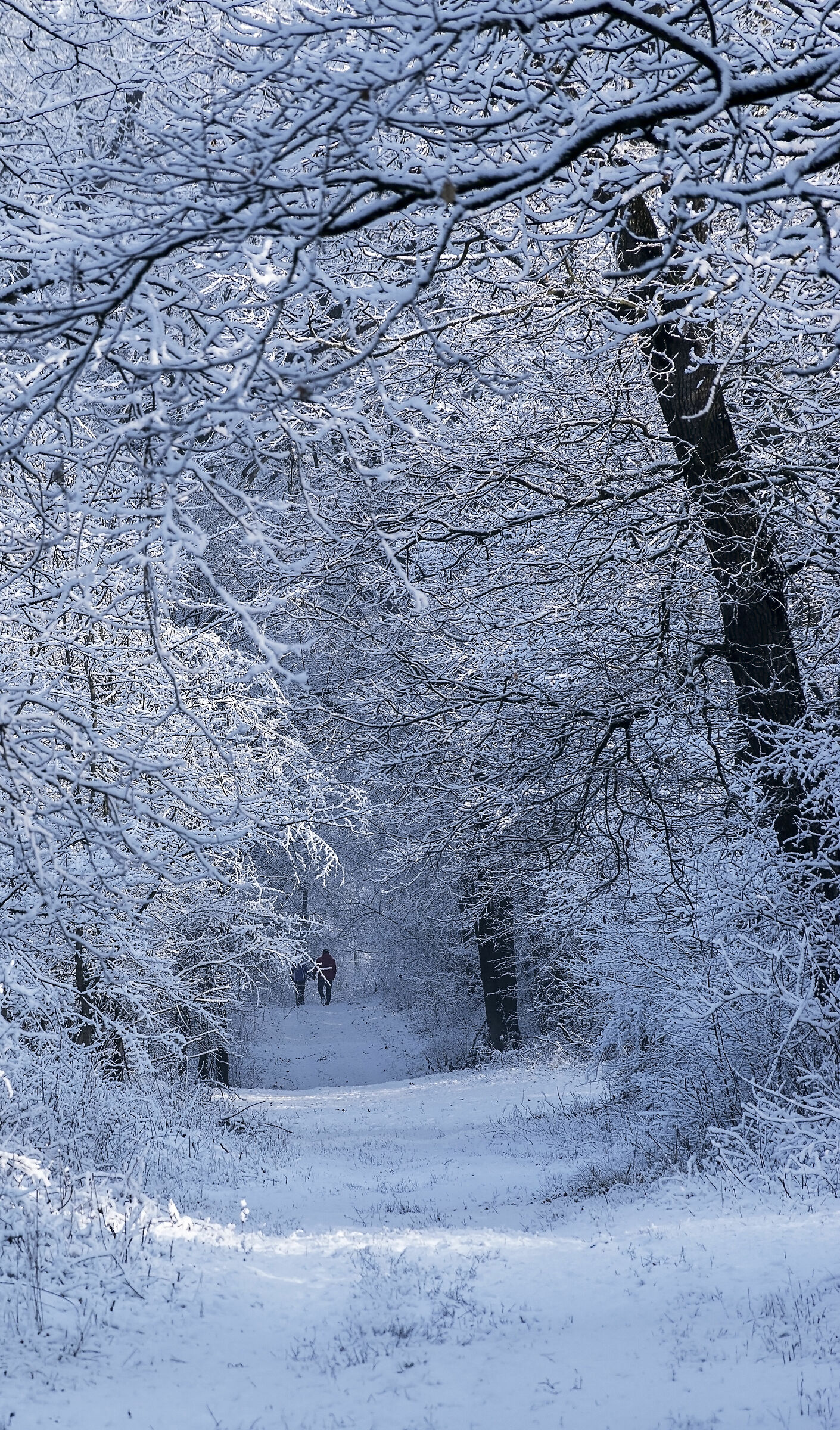 Winter graphics...