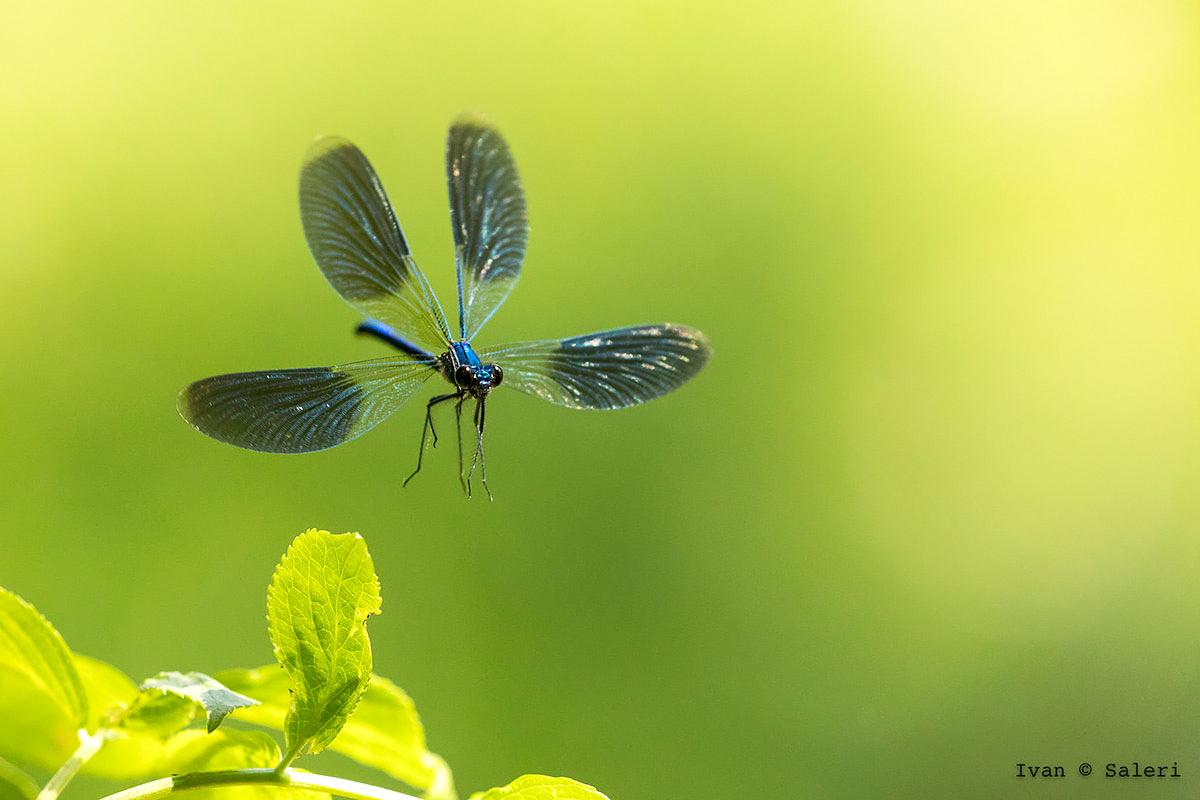 Dragonfly...