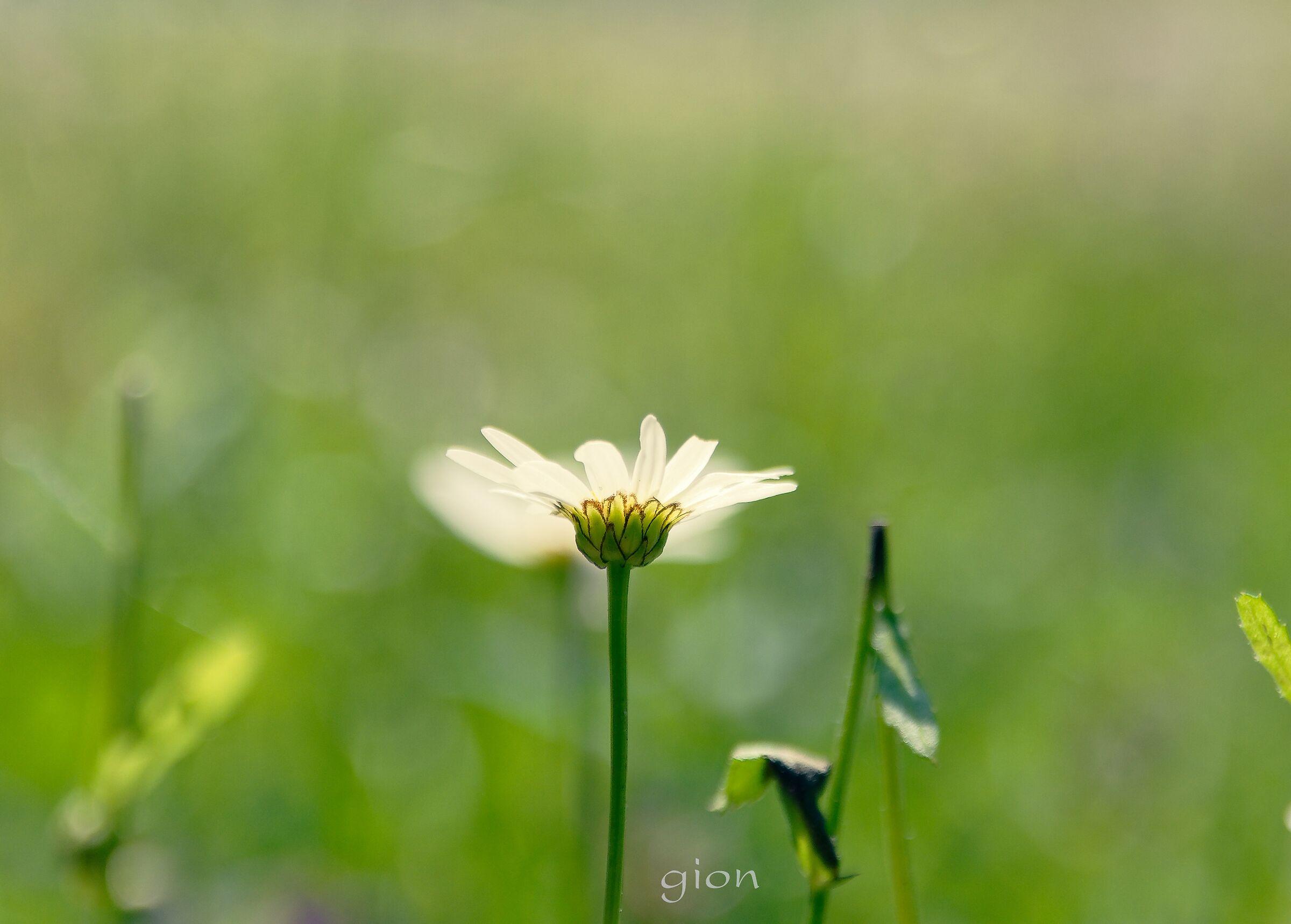 Just flower...