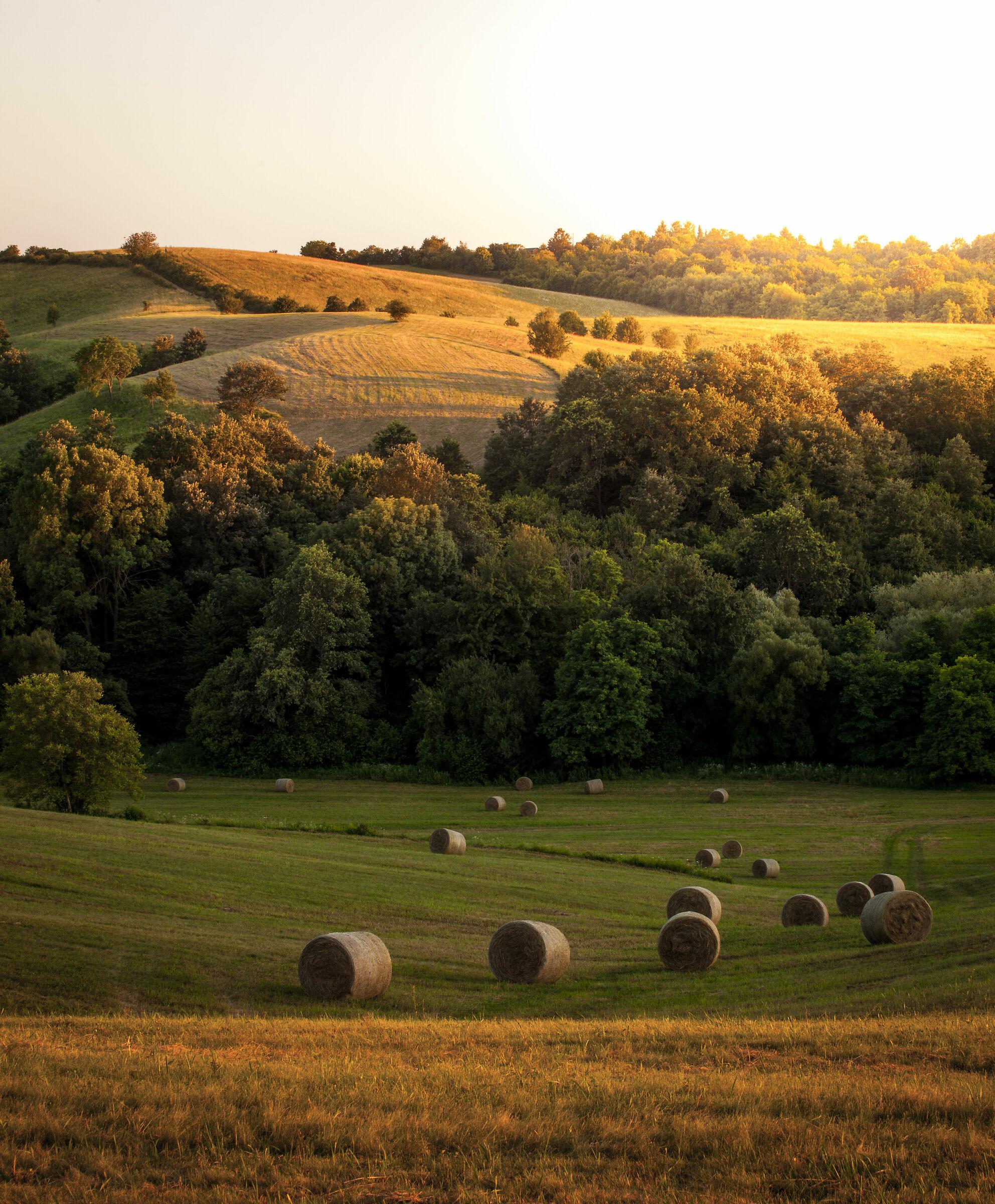 Baranya Landscape...