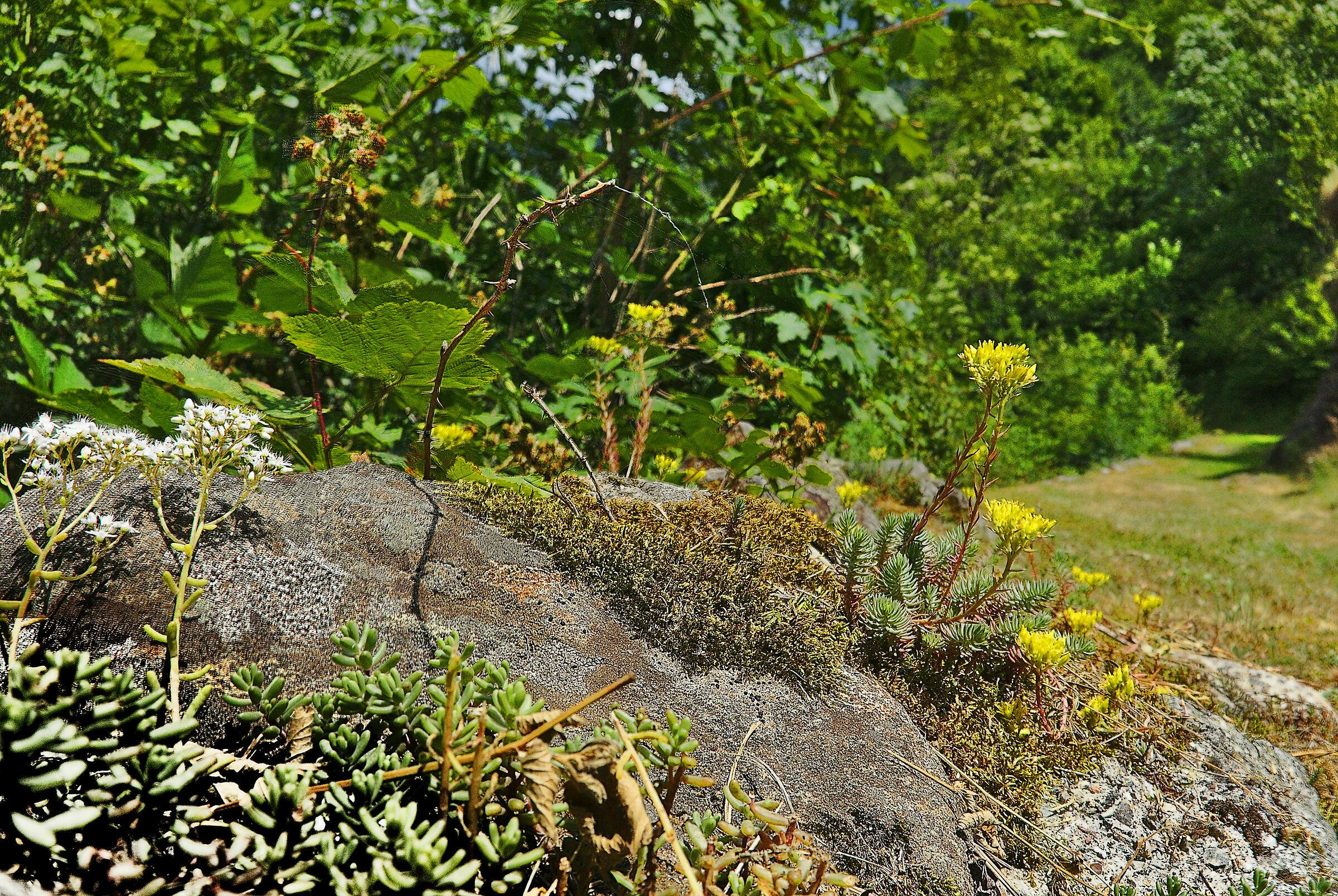 Alpine Grass plants...