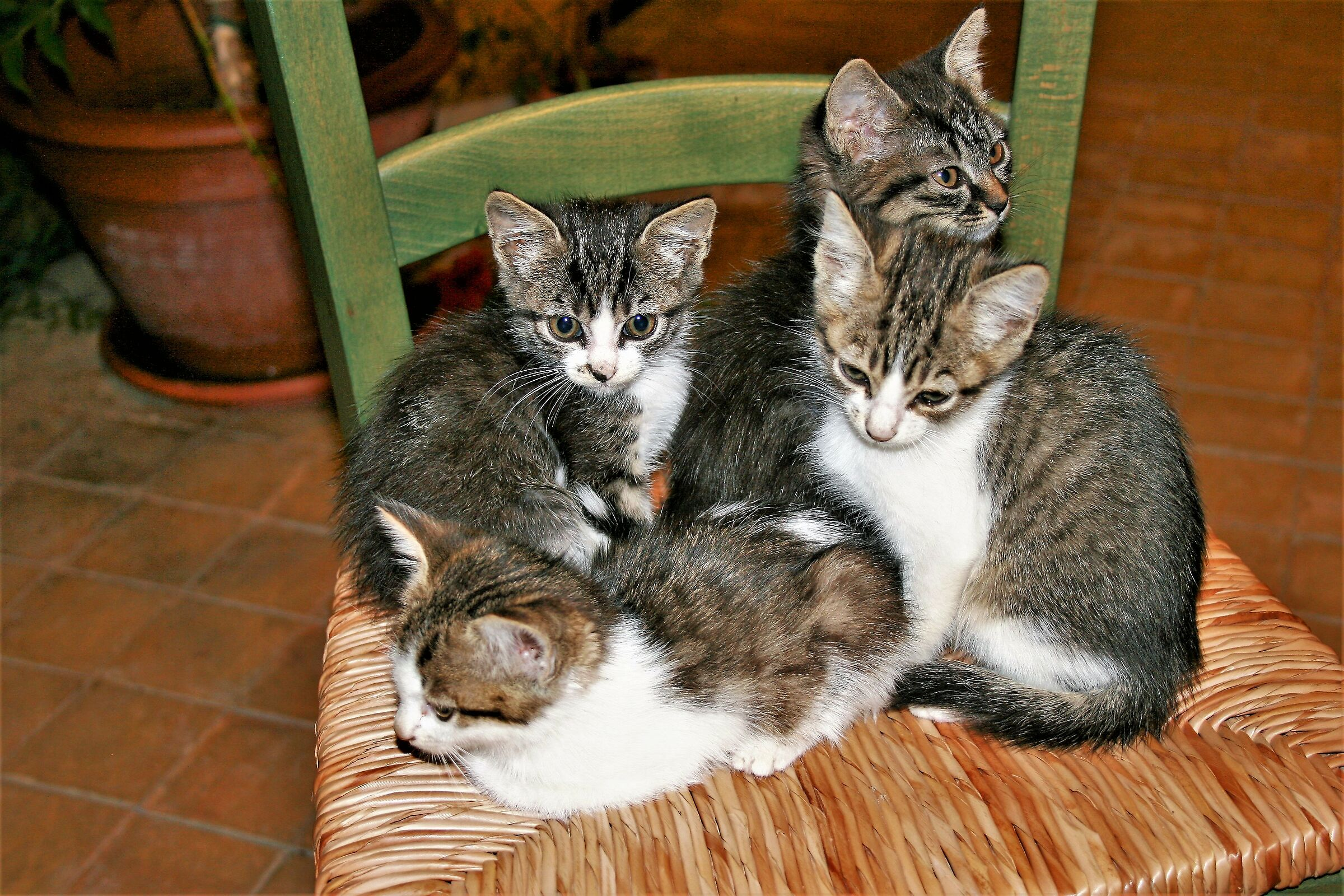 The Four Little Brothers...