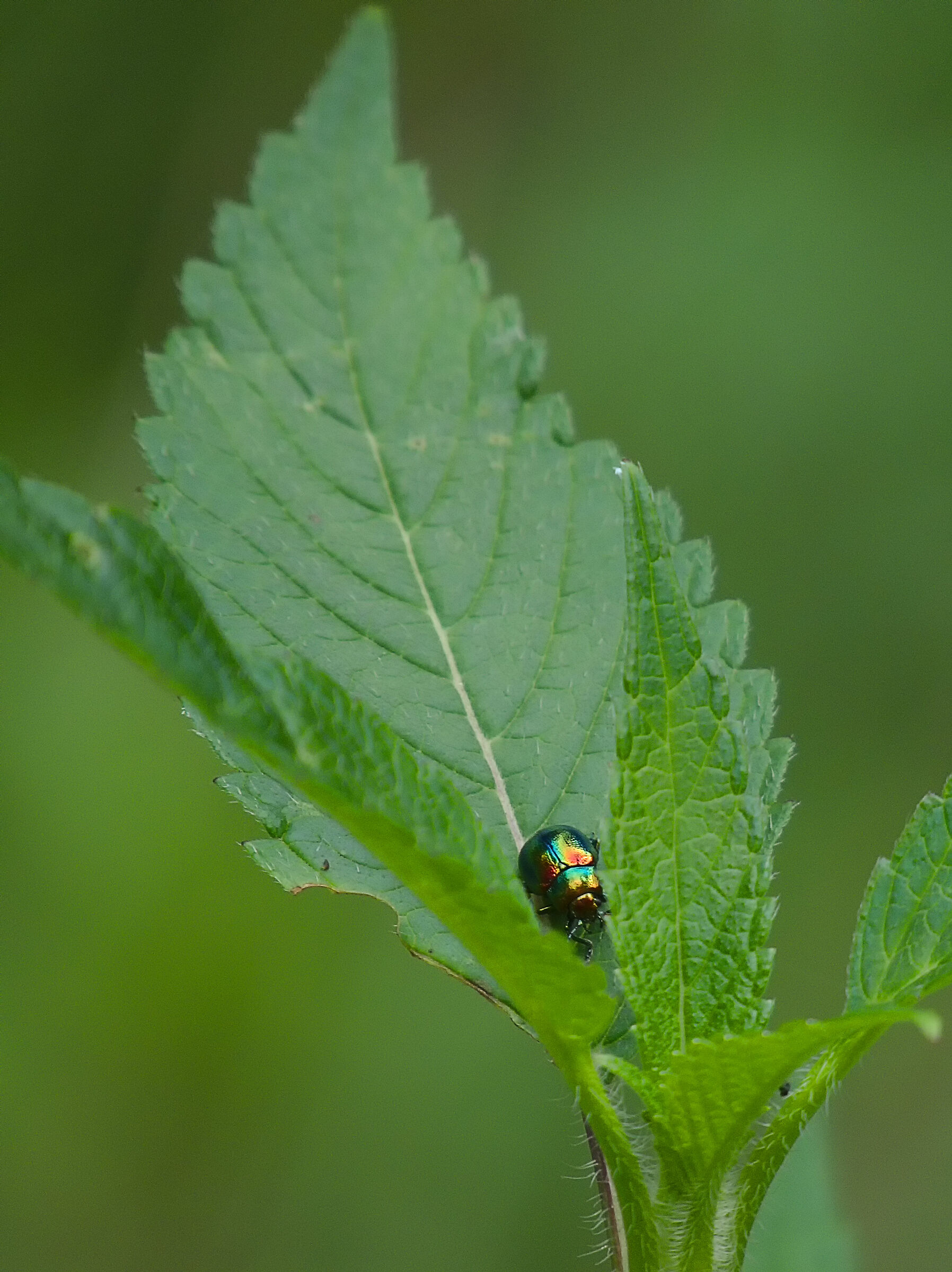 Colorful Beetle...