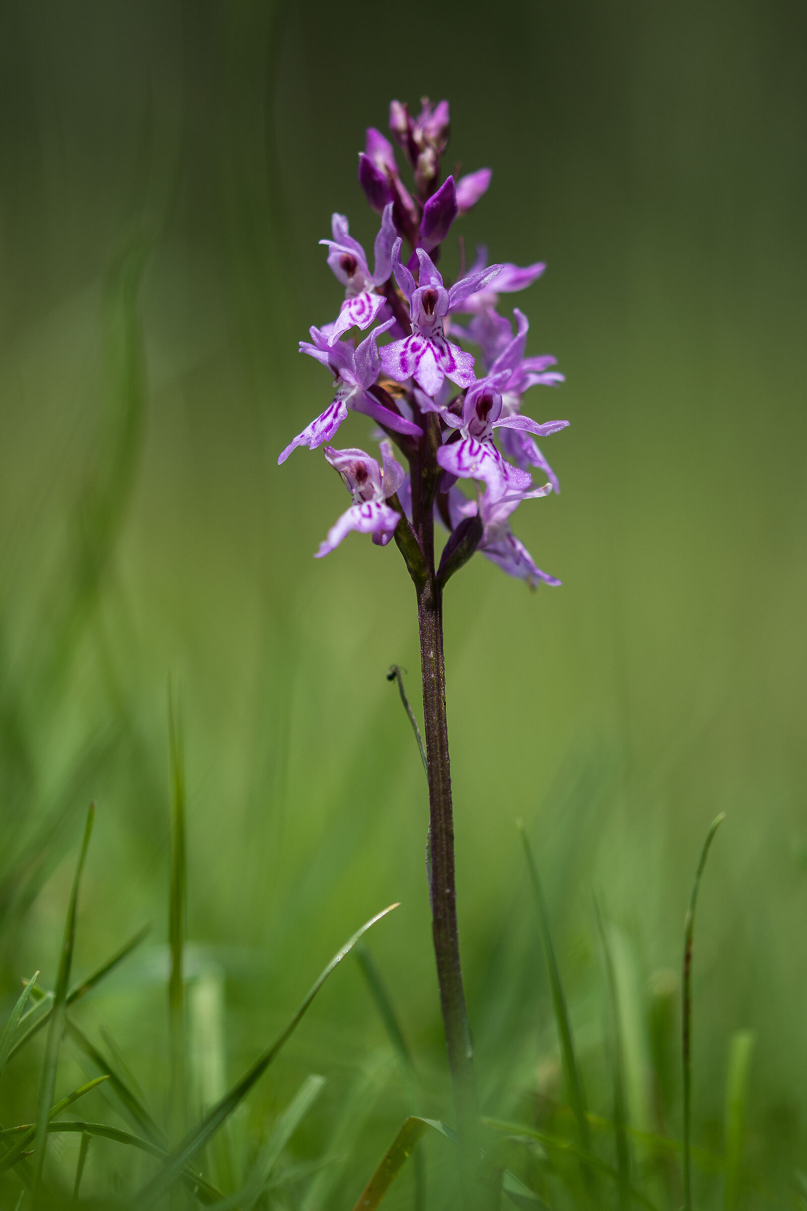 Small orchids grow...