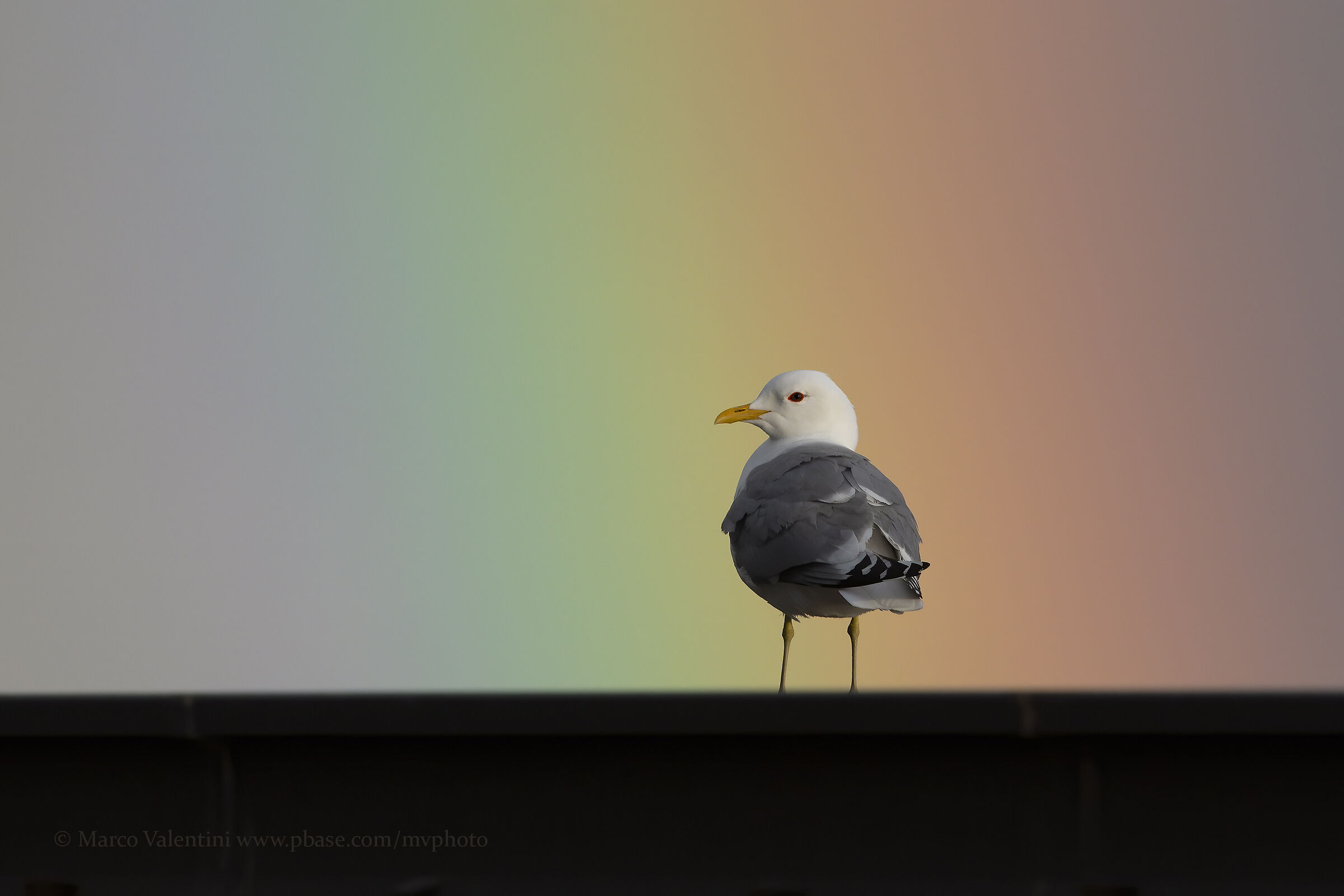Gavina and rainbow...
