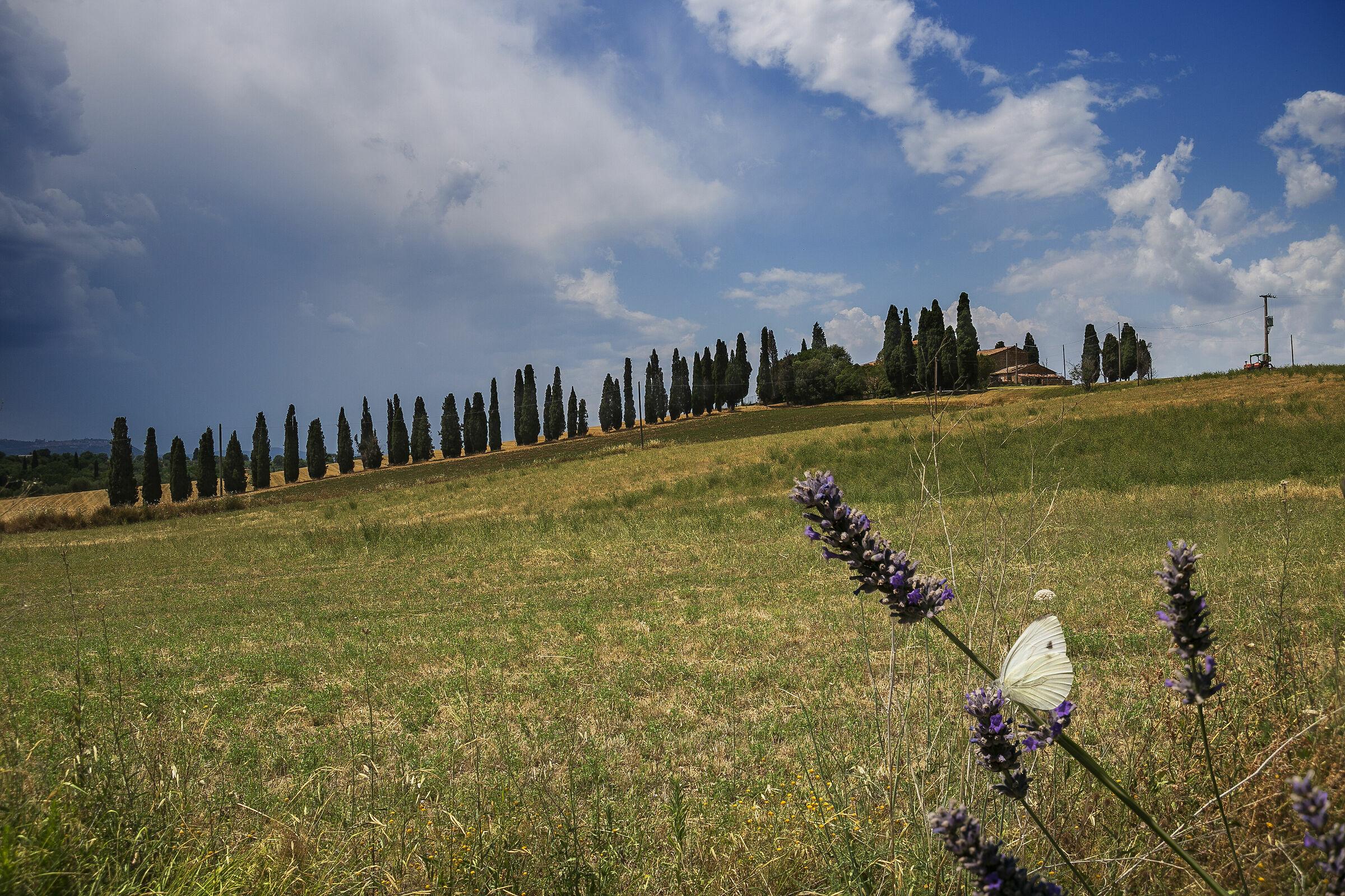 Summer Tuscany....