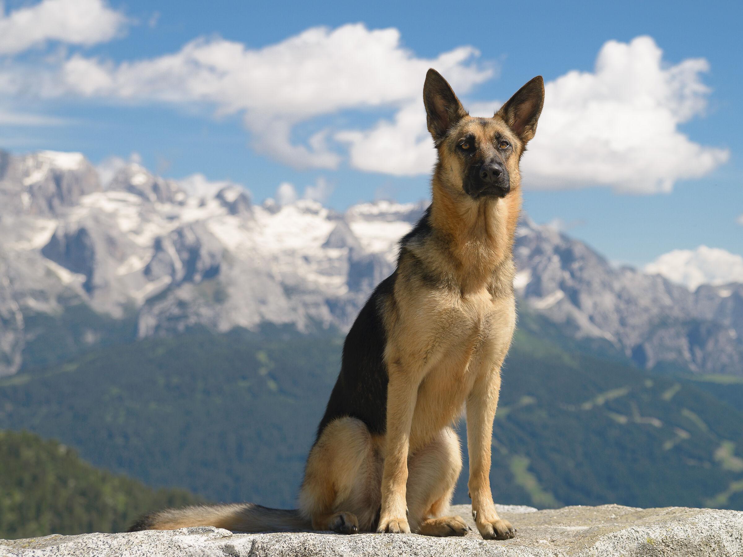 A high-altitude puppy...
