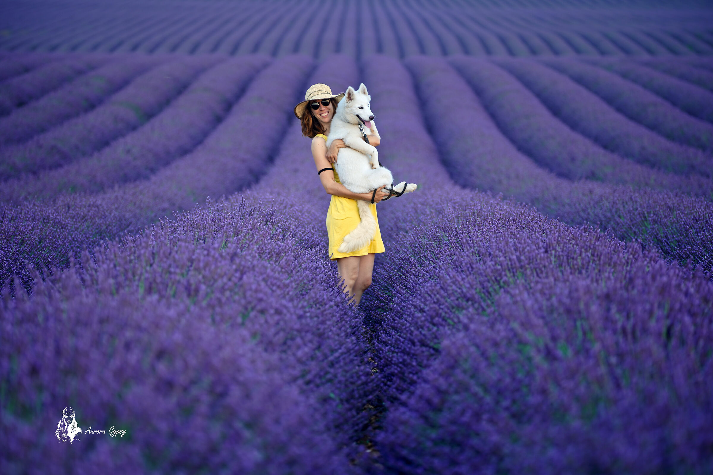 Sweet lavender campion sororteners...