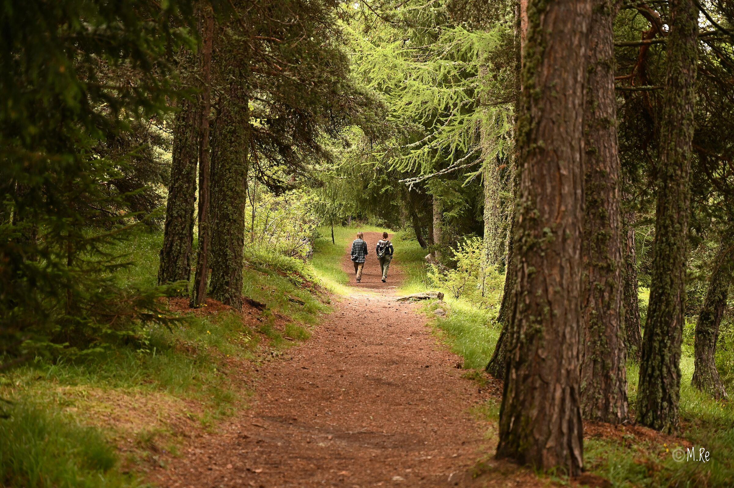 Walking in the woods...