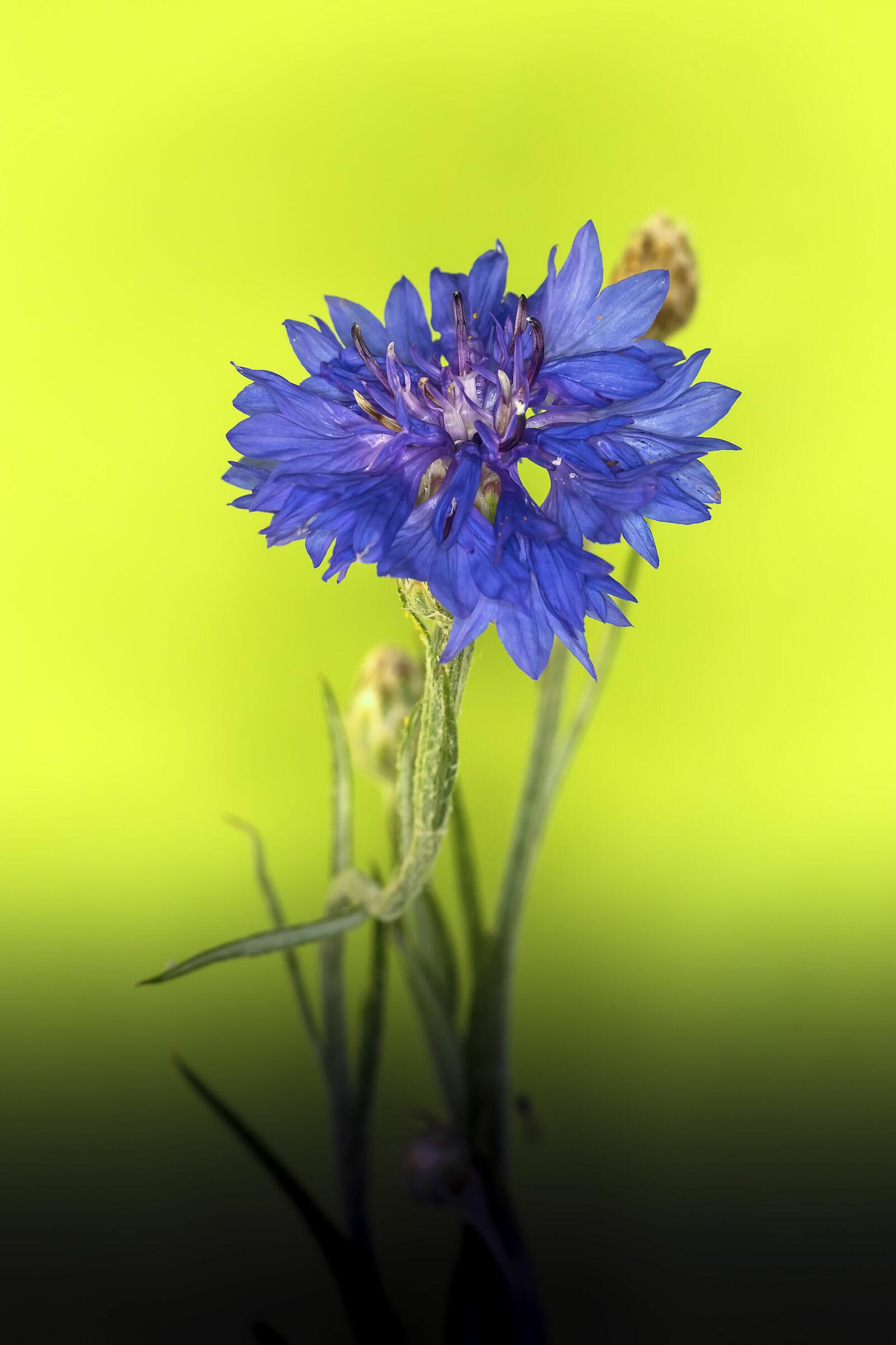 The beautiful blue...
