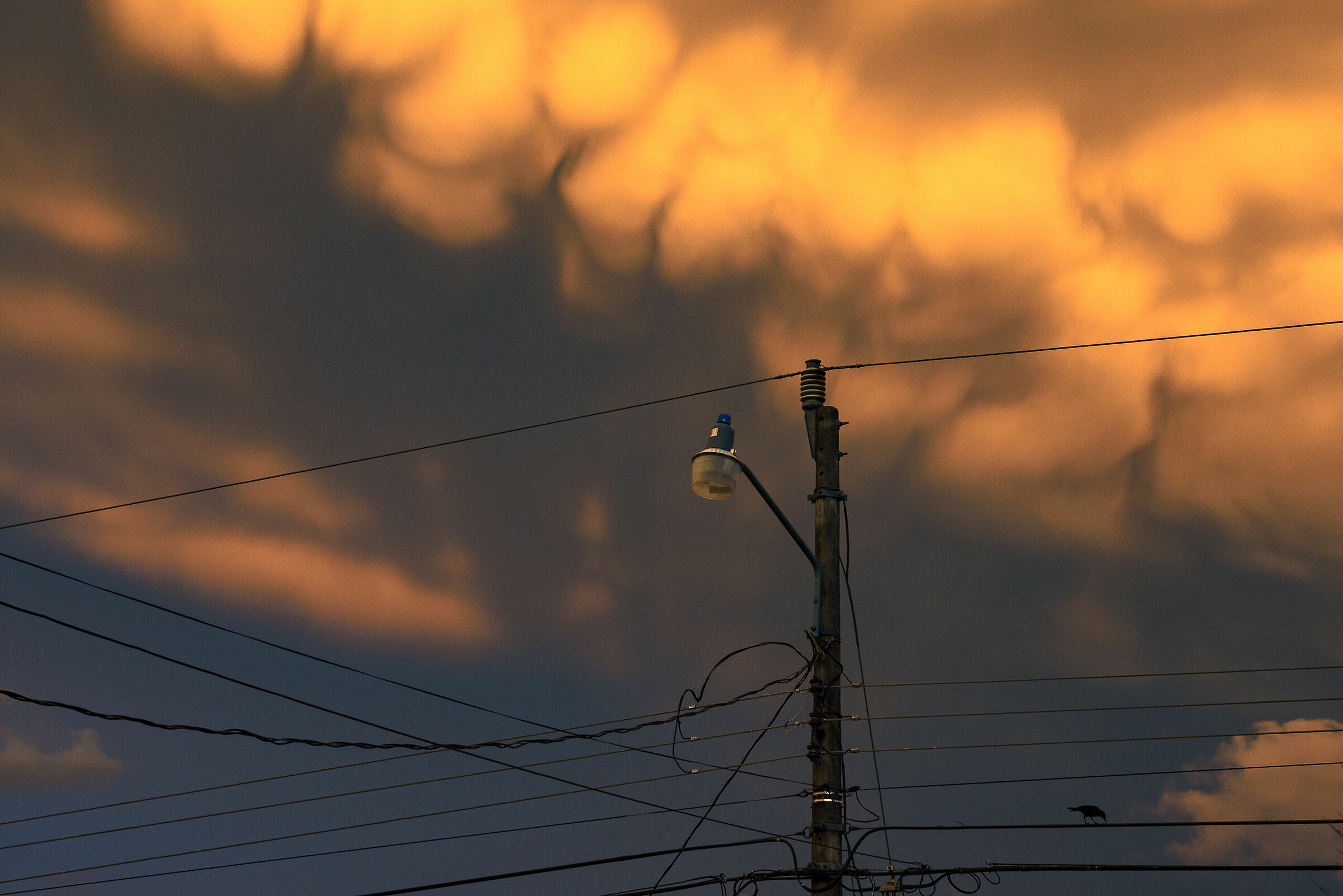 Sunset on the wires......
