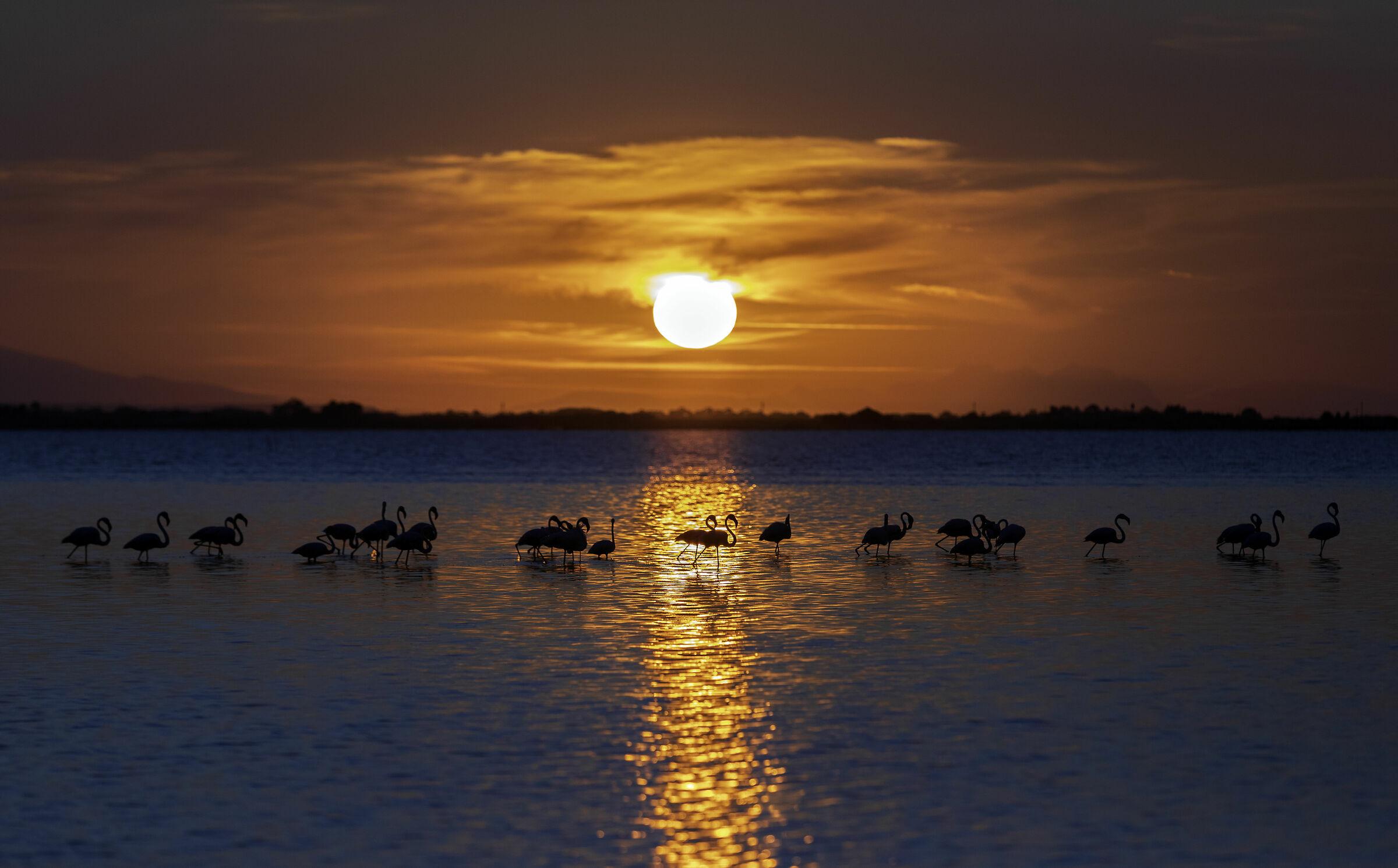 Flamingos at sunset...