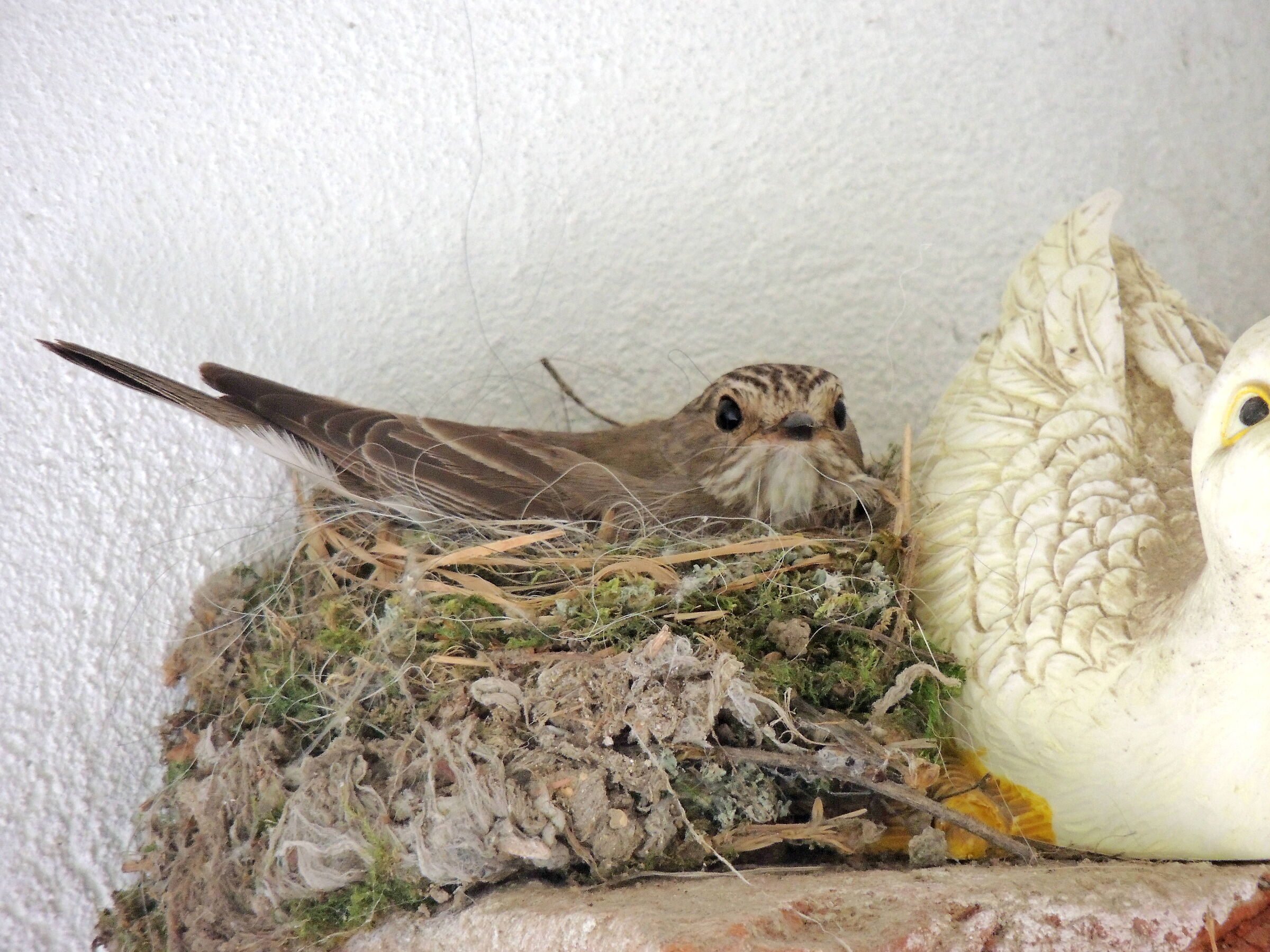 flyovers on the nest...