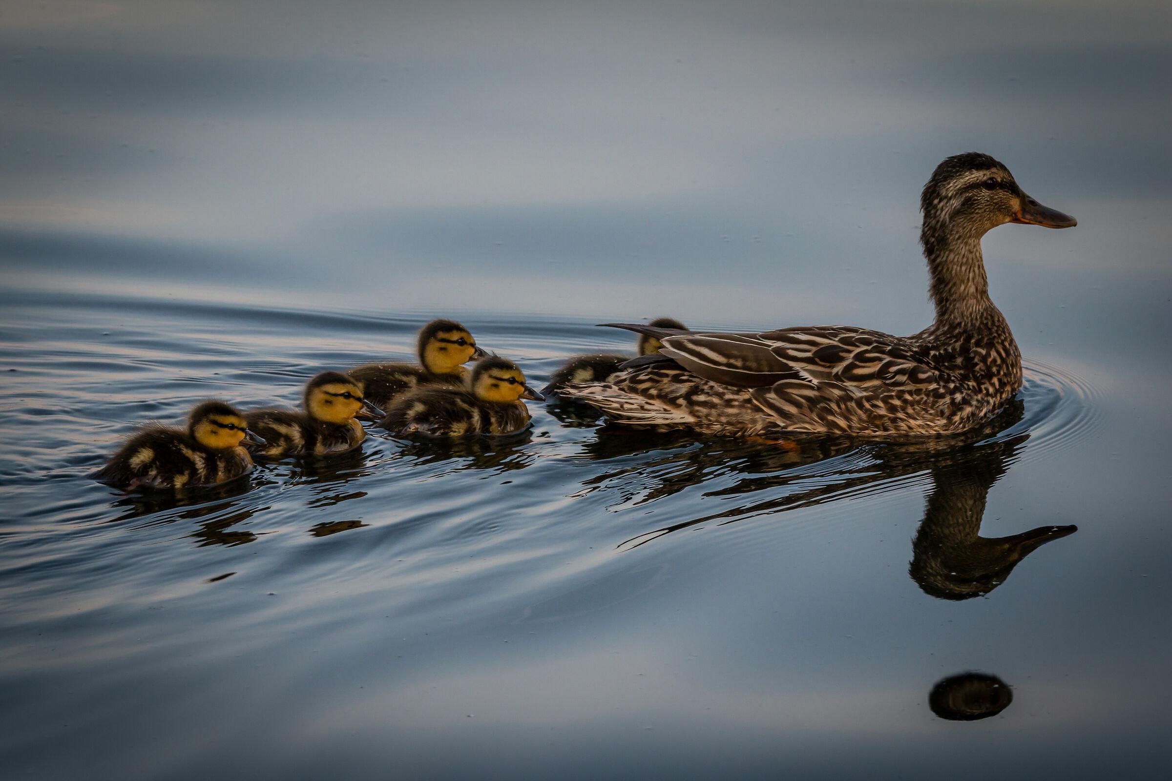 Happy Family ...