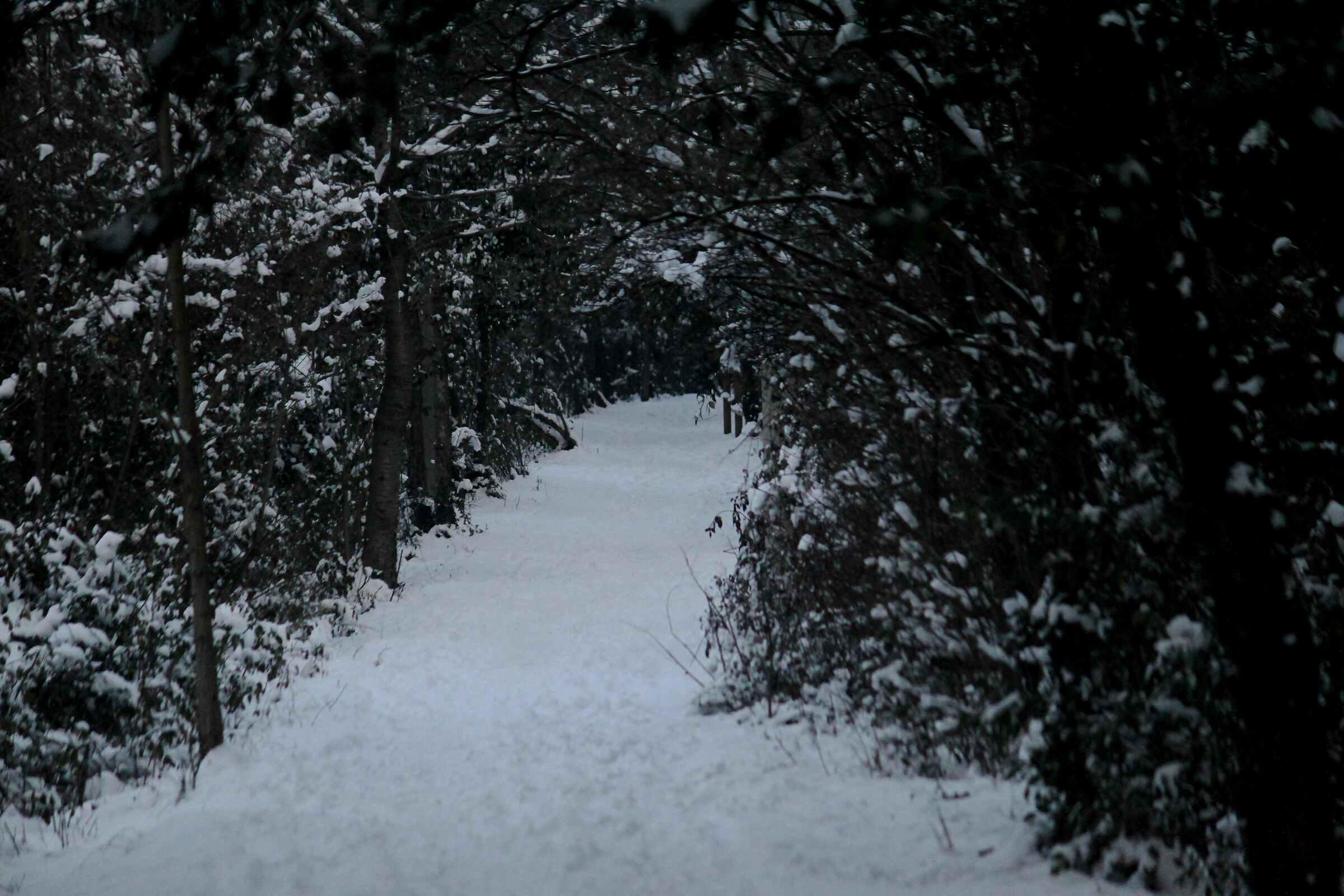 trail in the snow...