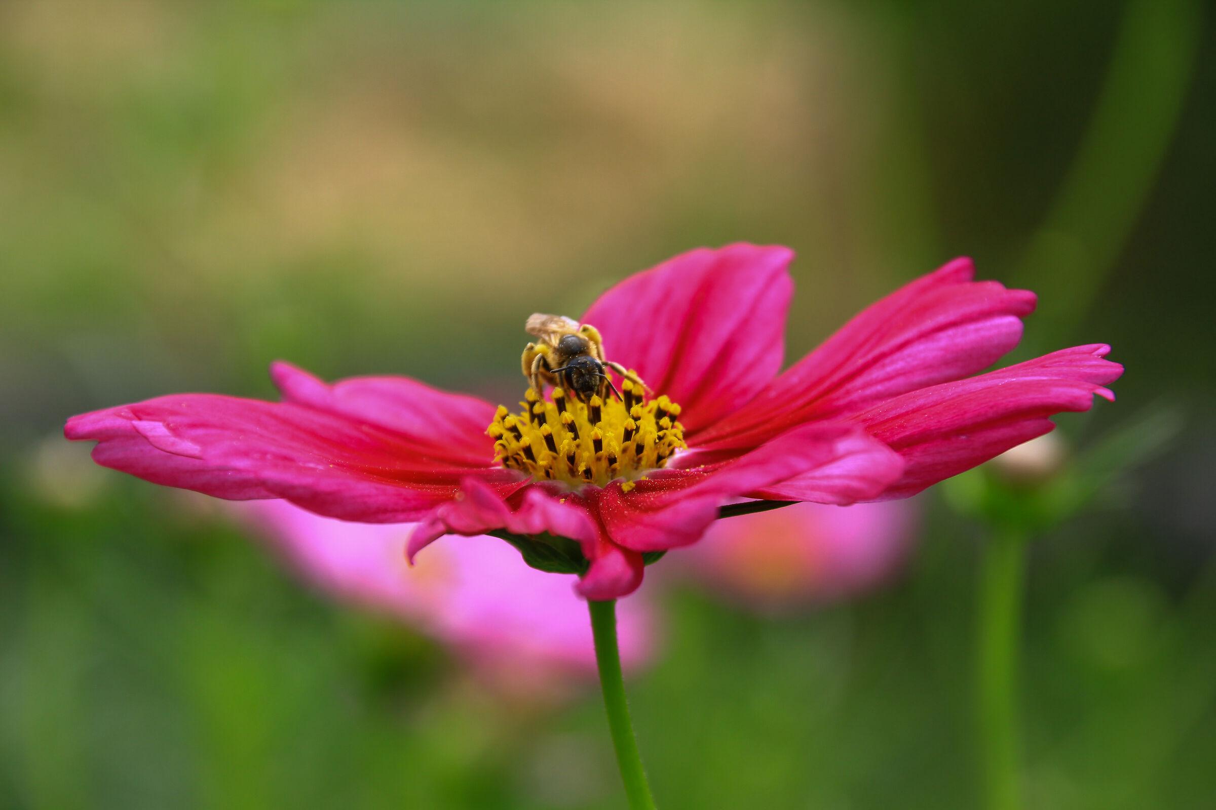 walking on the flower...