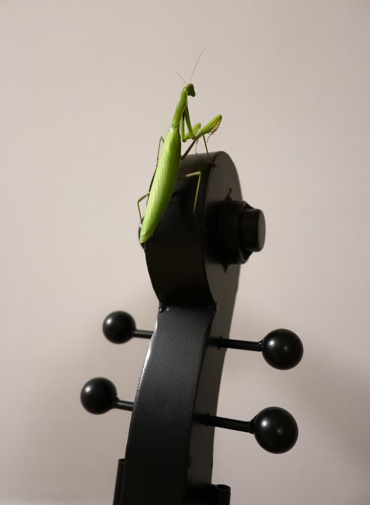 Musical talent...