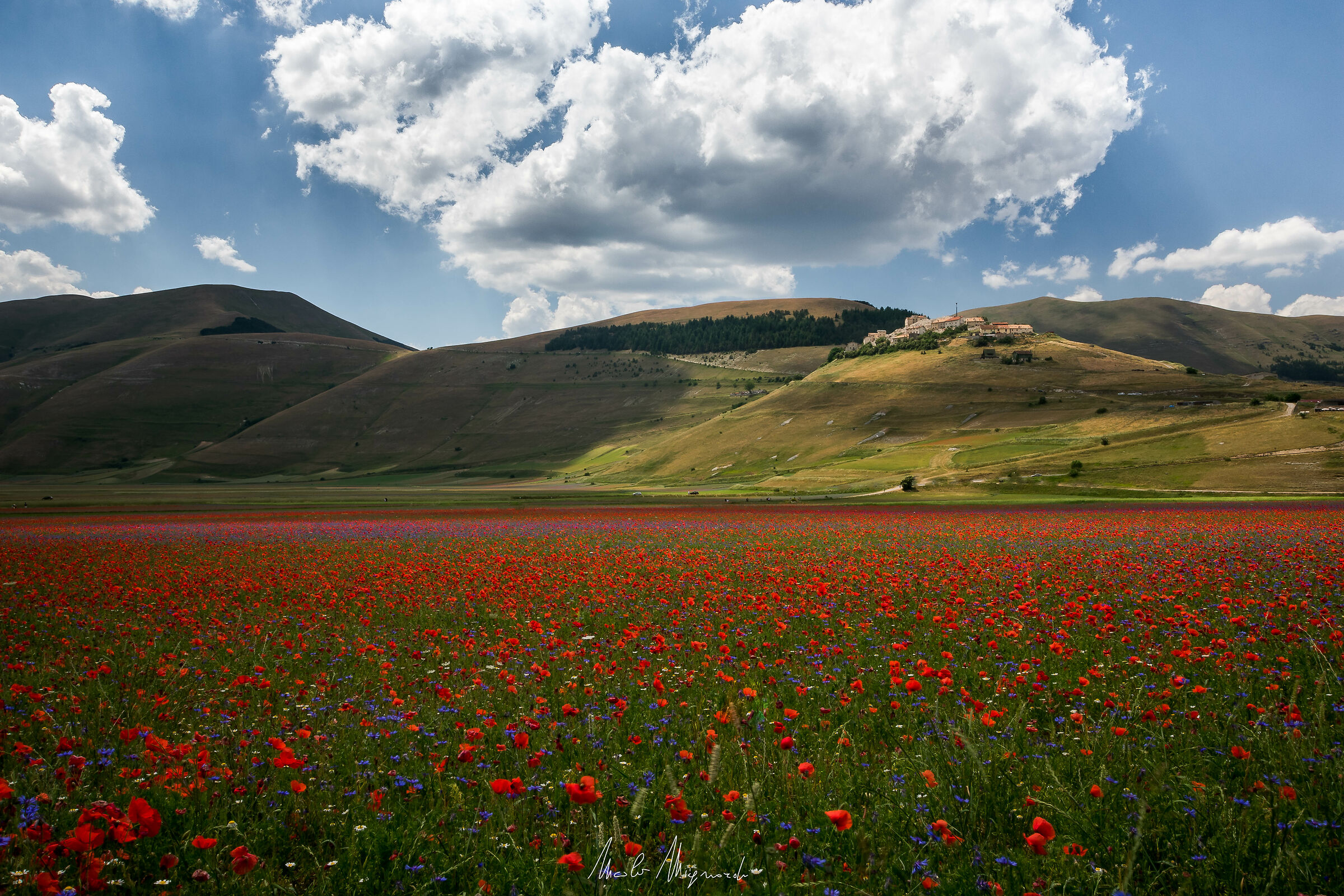 Castelluccio, guardiano di fiori (2019)...