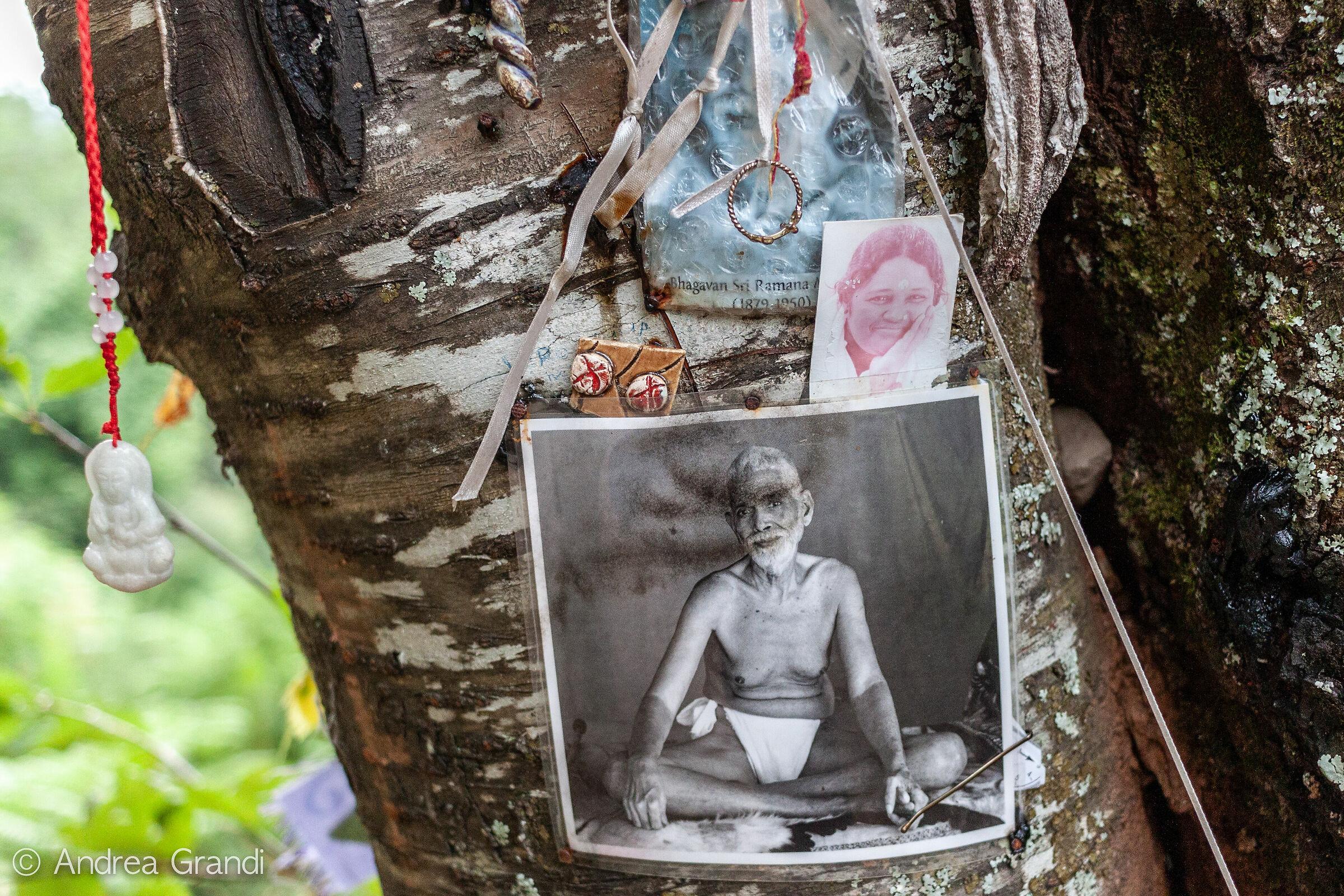 Foto lasciate in omaggio sull'albero con gli occhi...