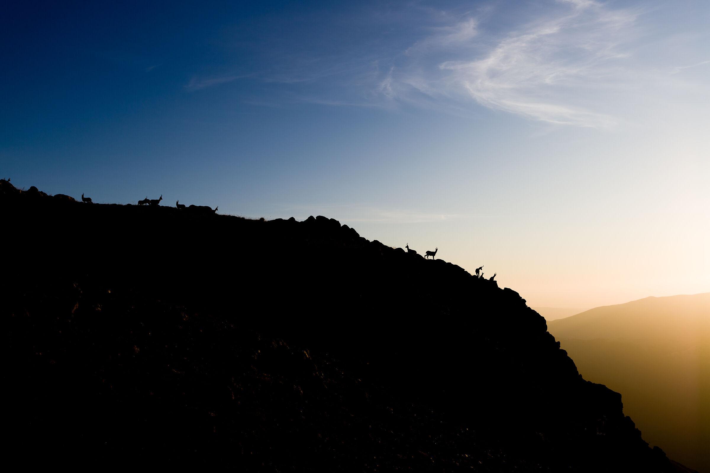 Camosci on the horizon...