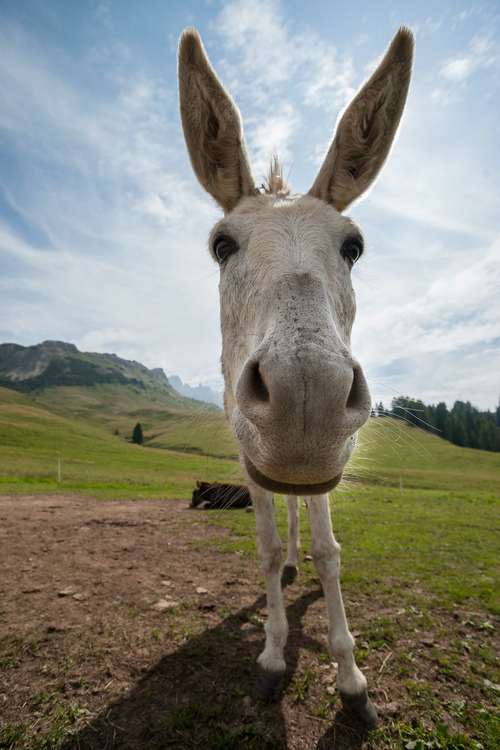 Friend Donkey...