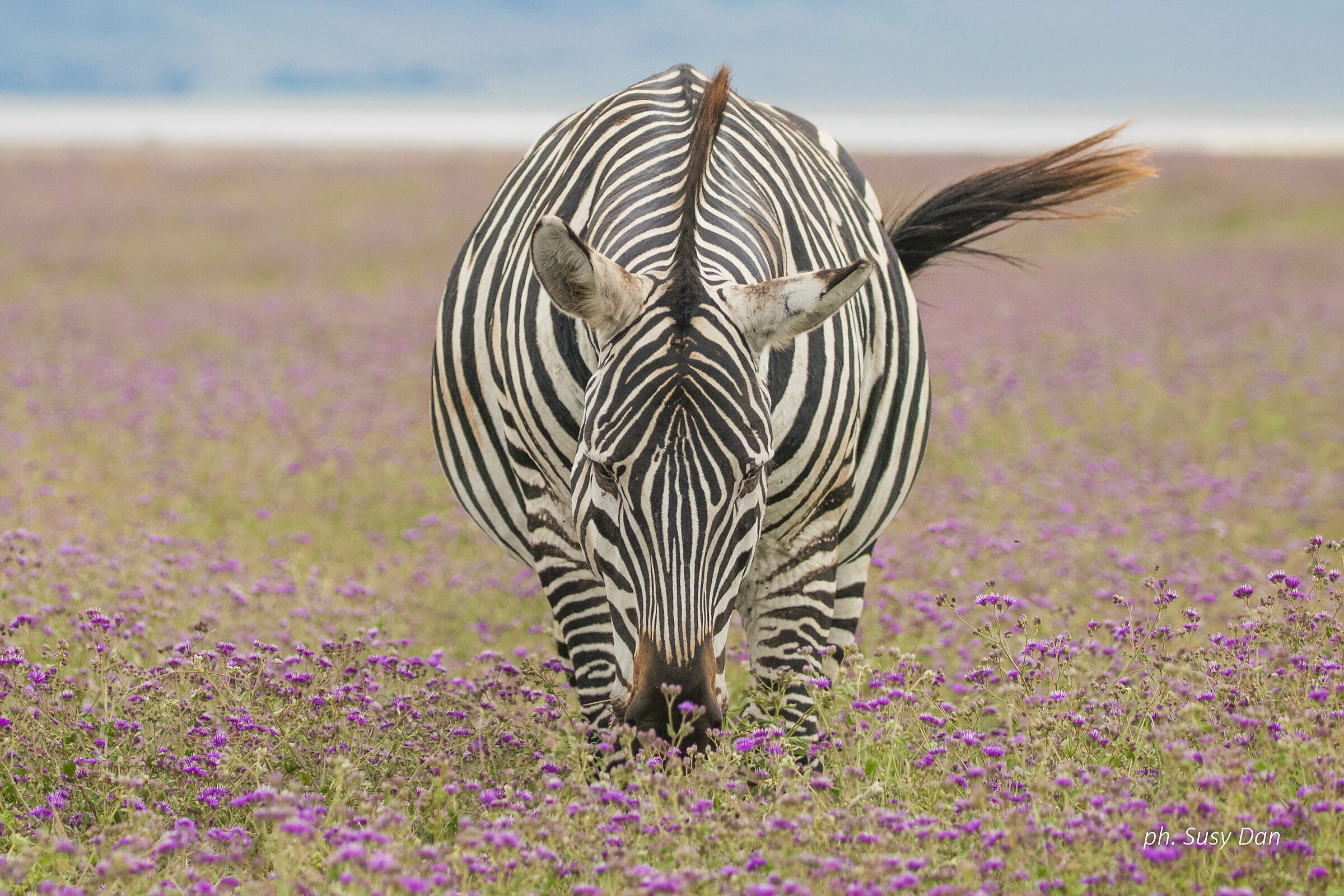 The zebra and the flowers...