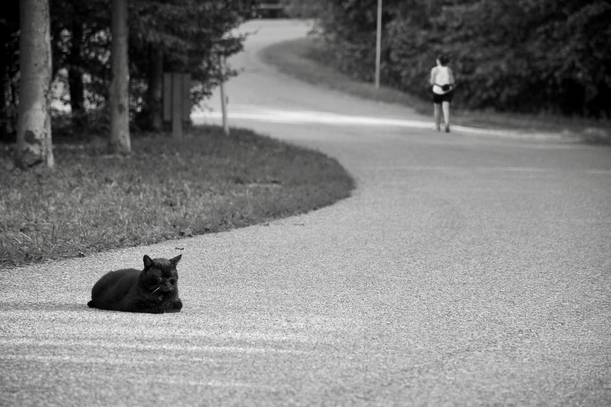 Siesta in the road...