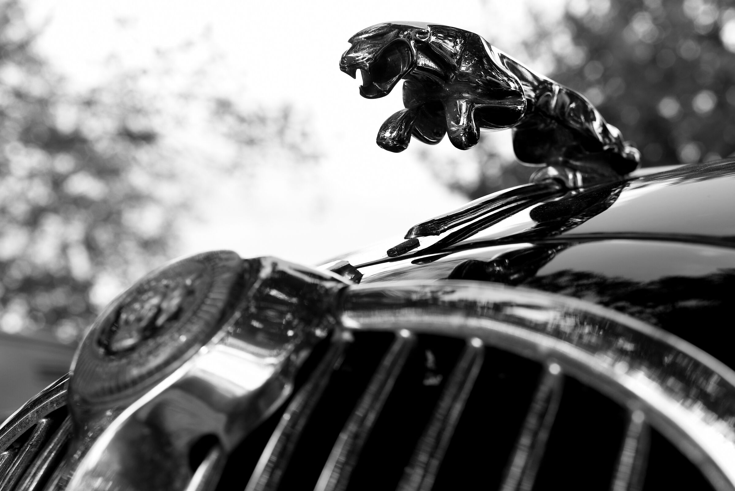 Rock'n Road 2019 - Jaguar...