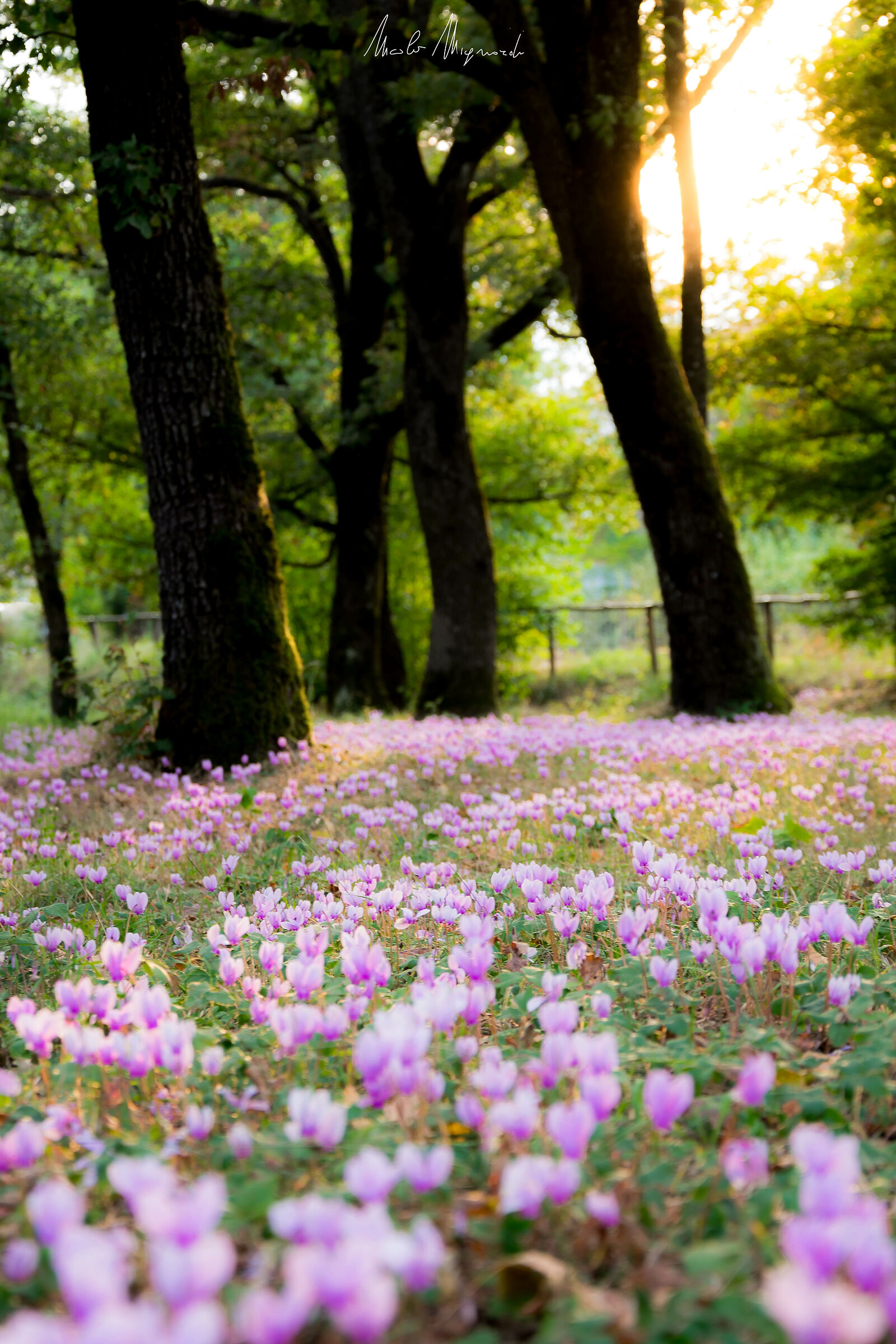 Autunno in rosa...