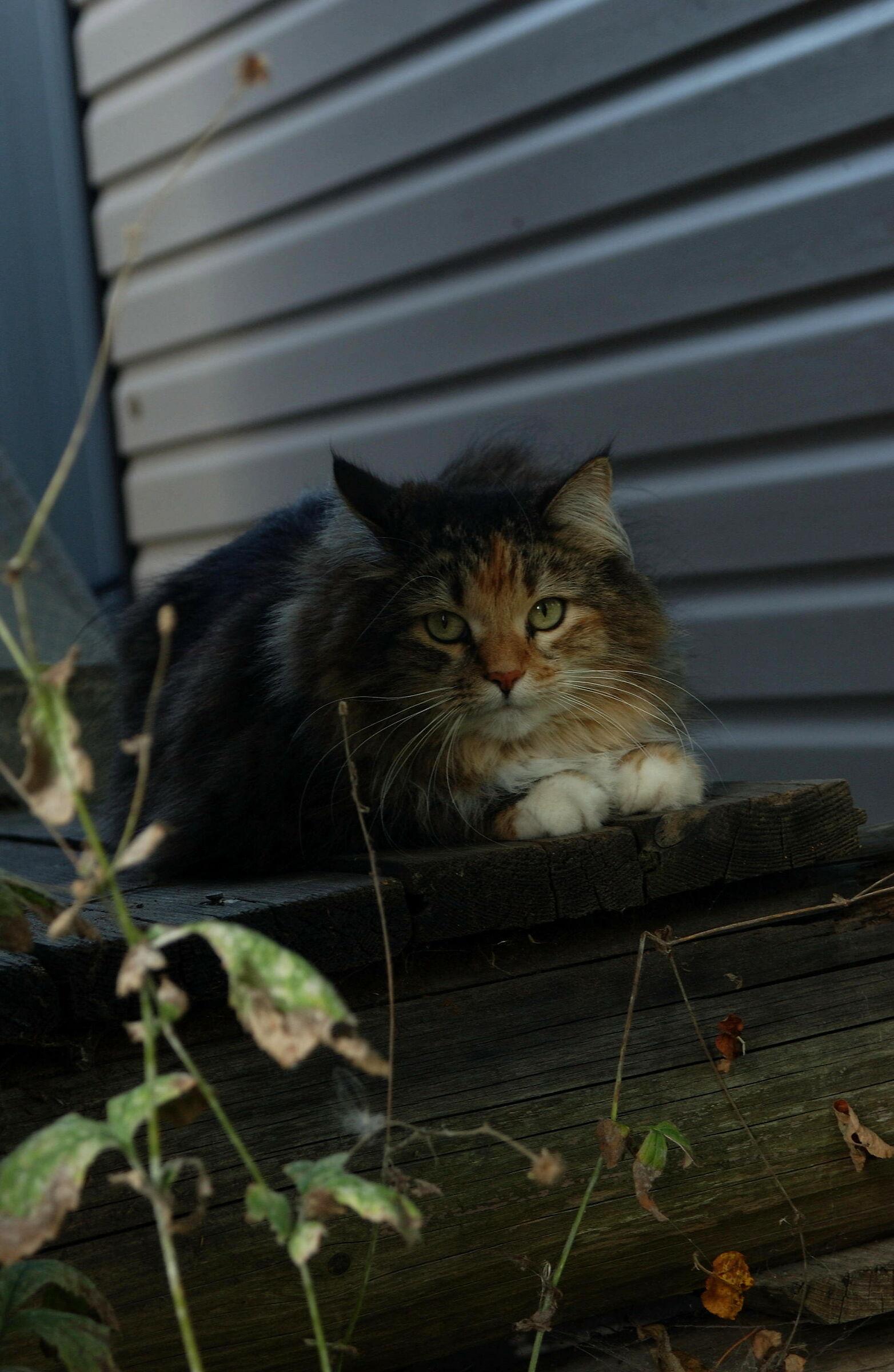 Gatto su un portico...
