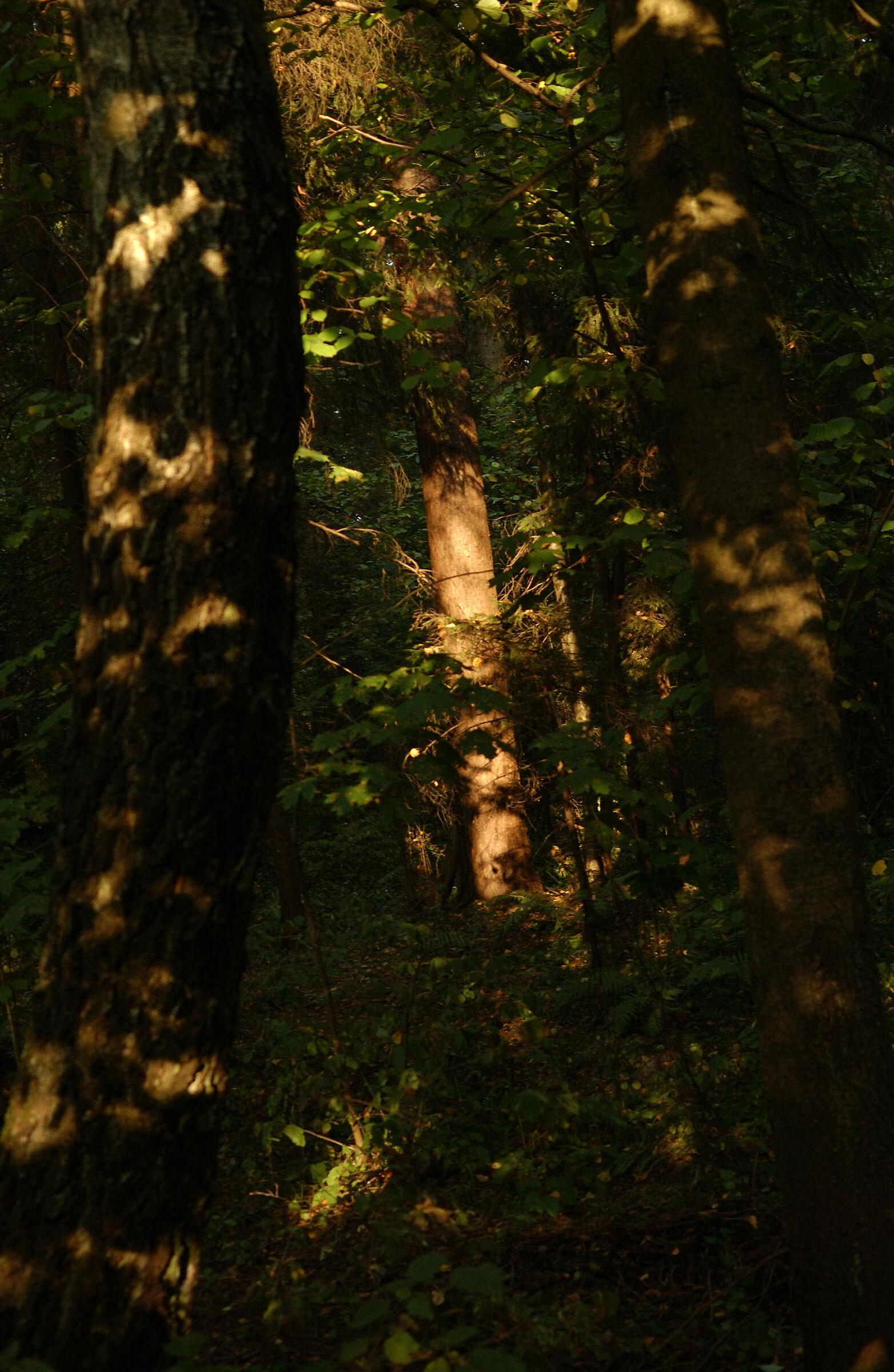 Sole caldo nella foresta...