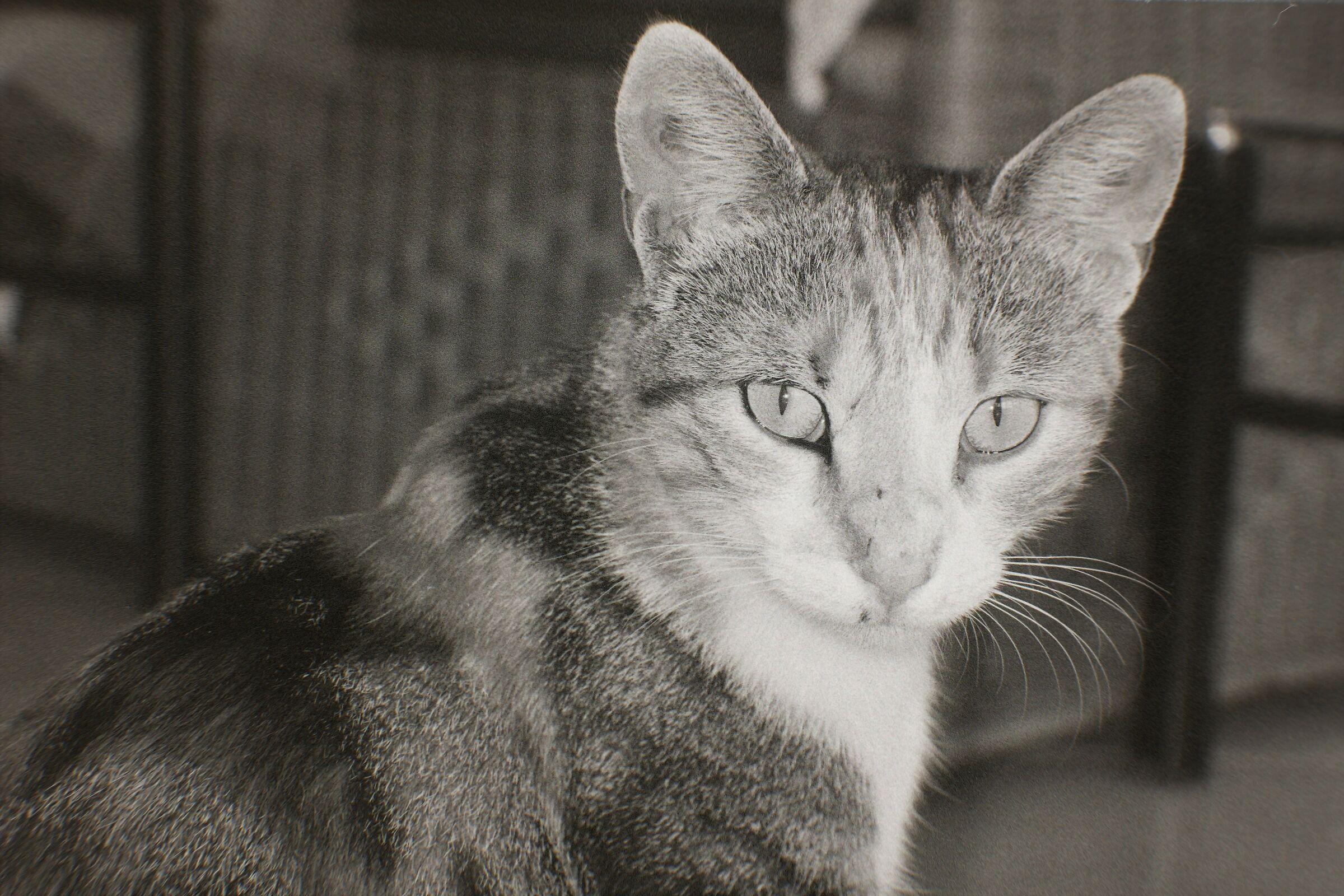 La mia gatta...