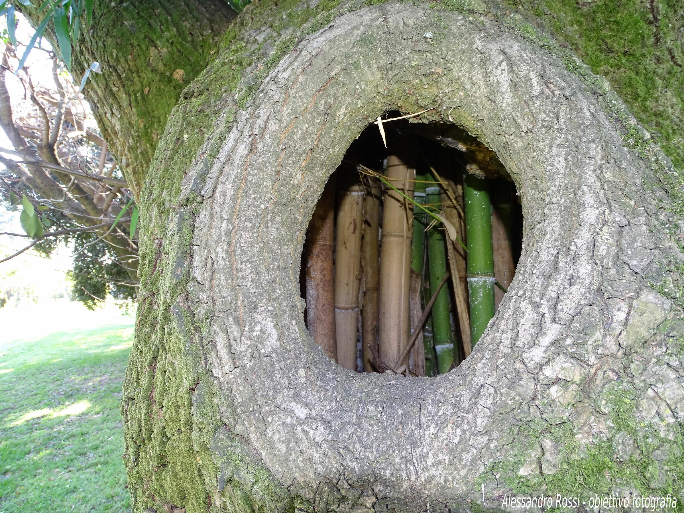 bambu' house...