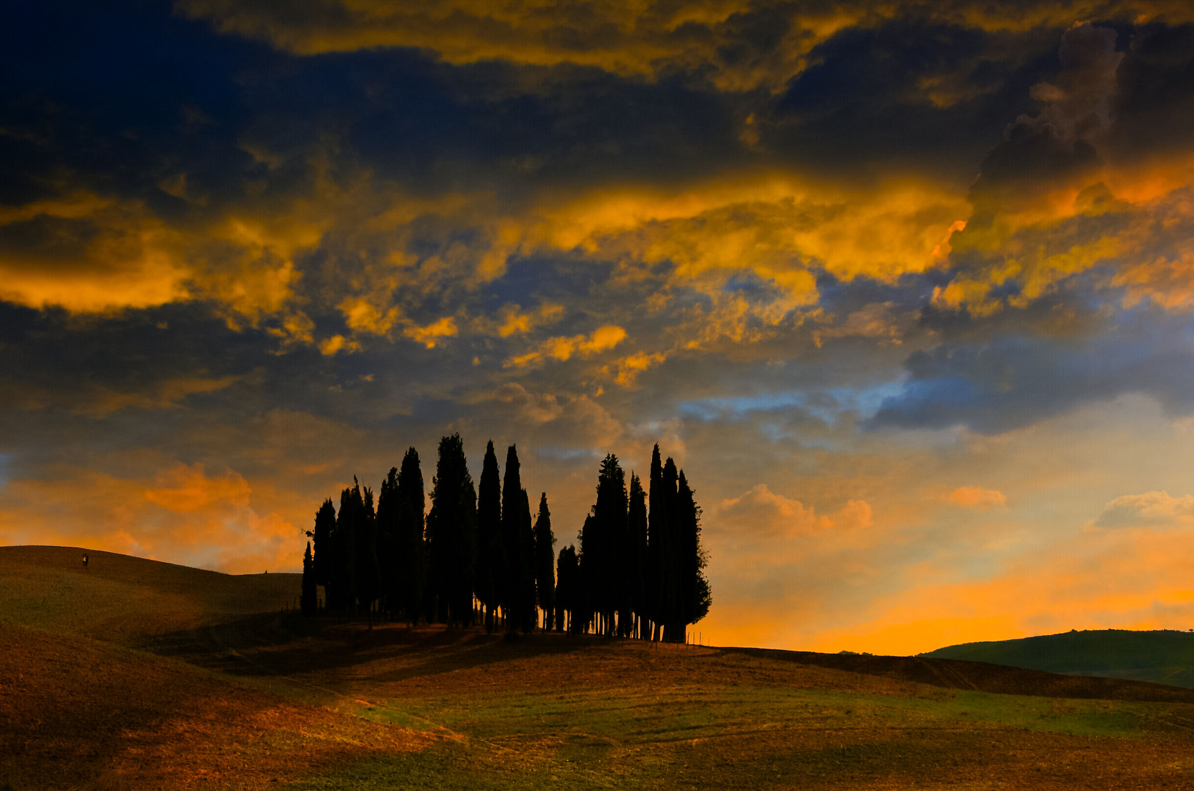 Cypresses of San Quirico d'Orcia at sunset...