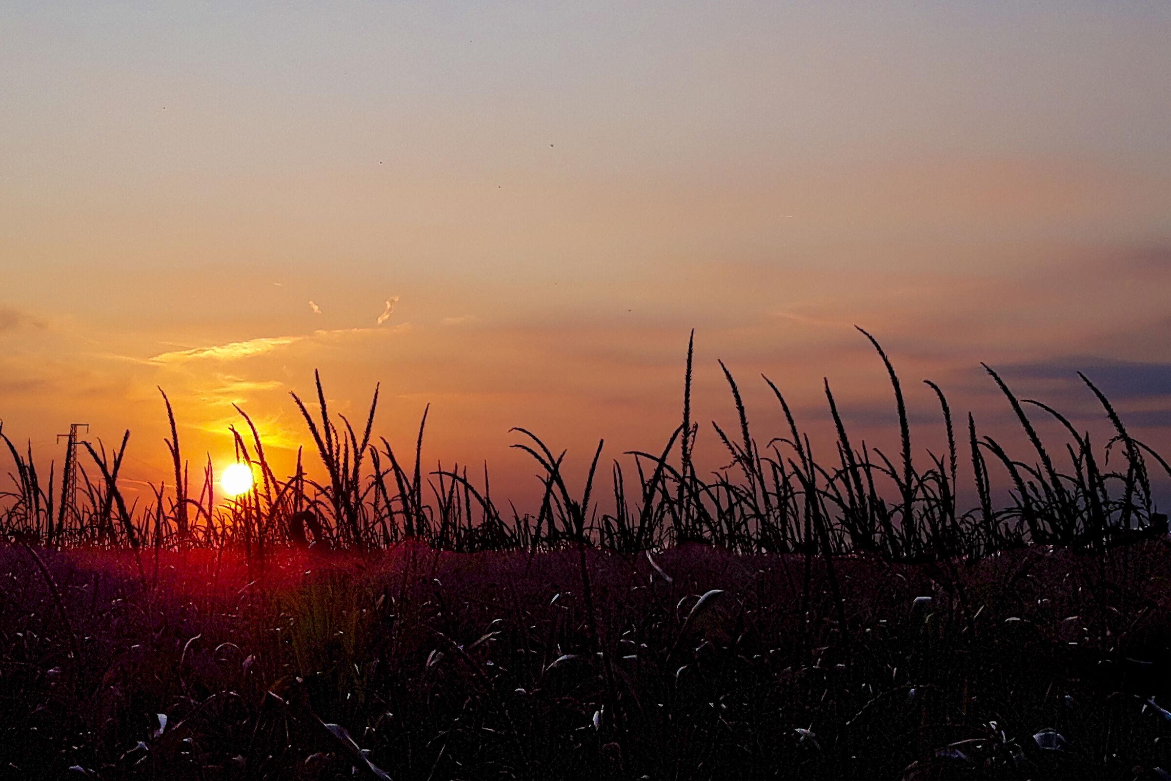 Un tranquillo tramonto di Campagna...