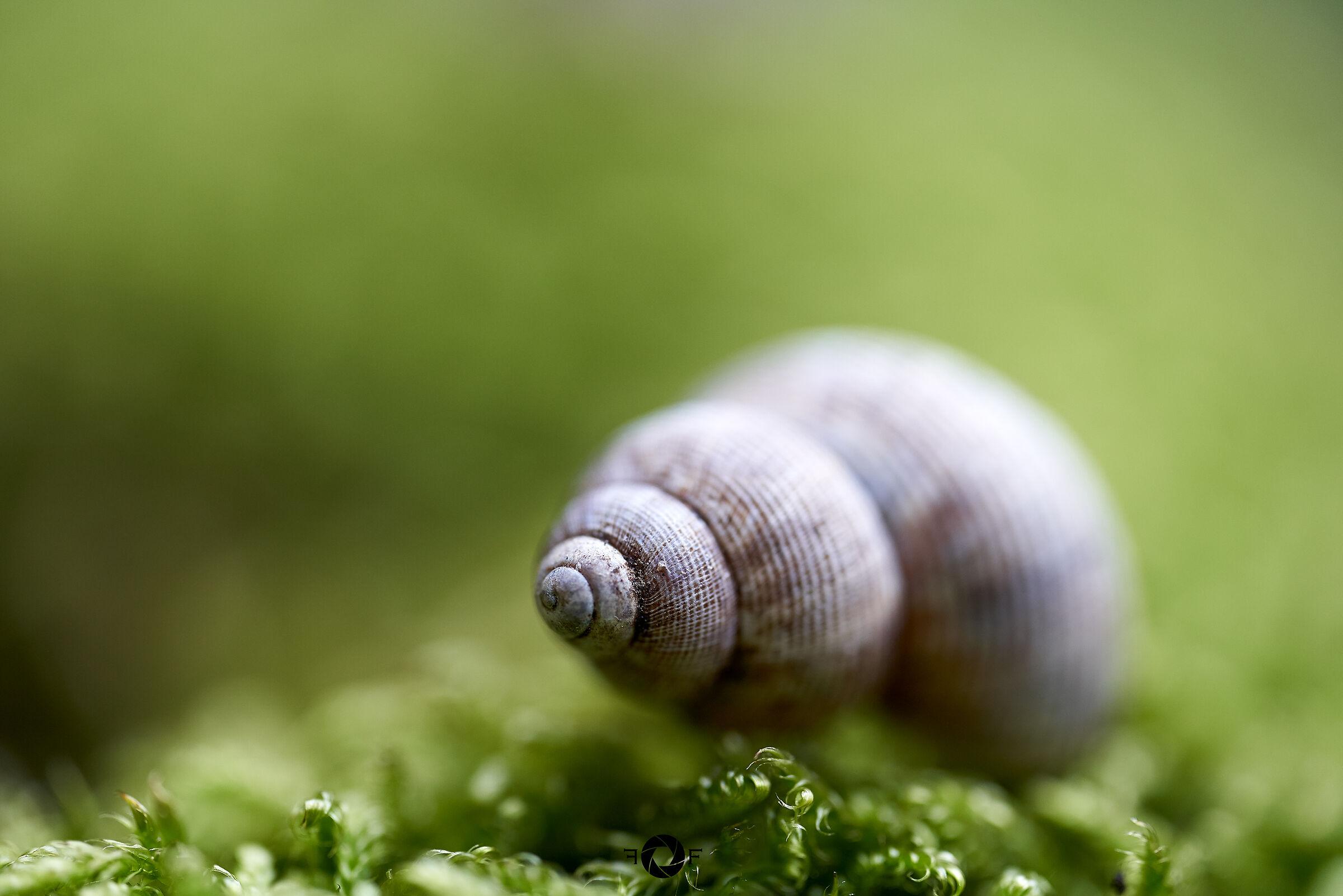 Spirali in miniatura...