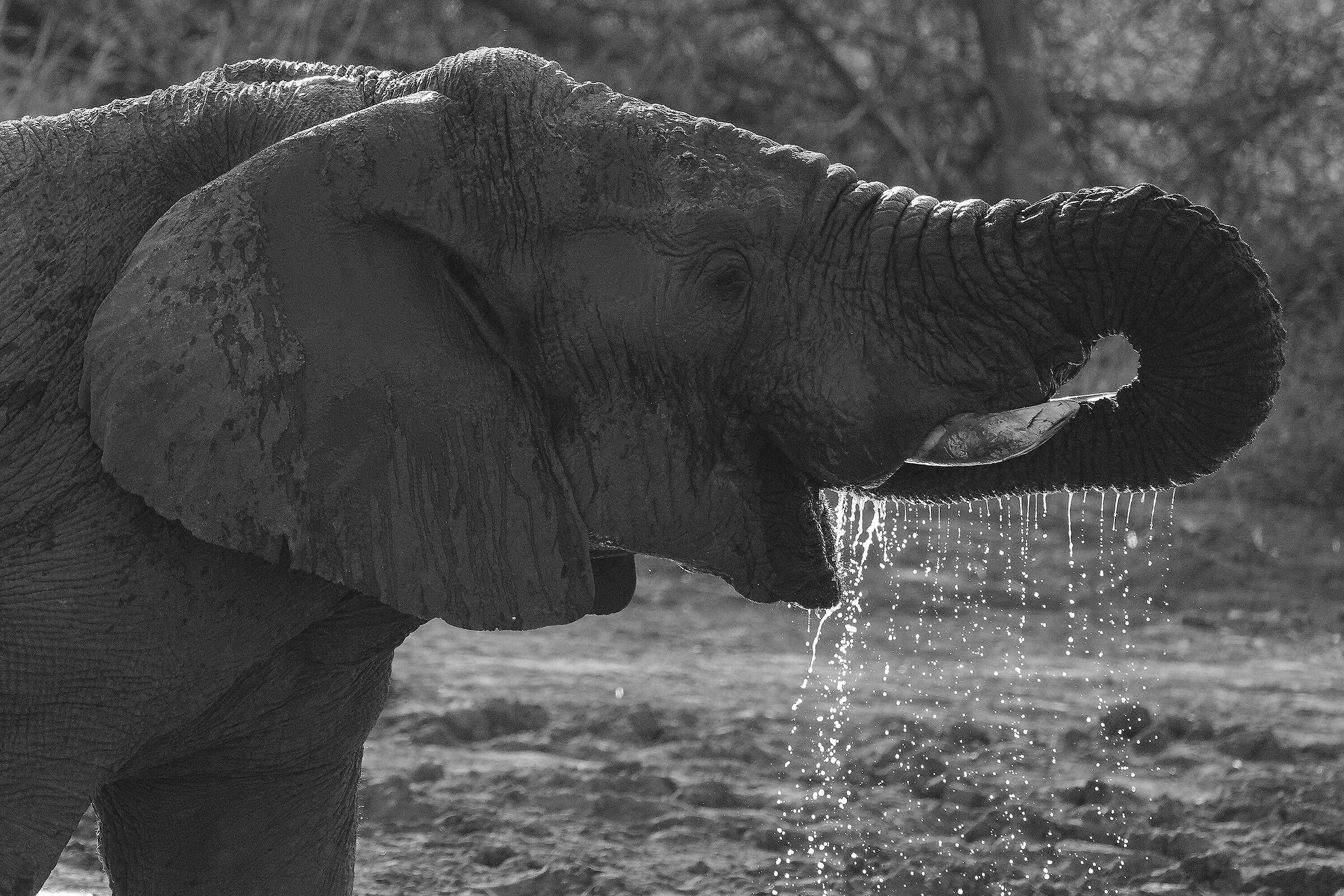 thirst...