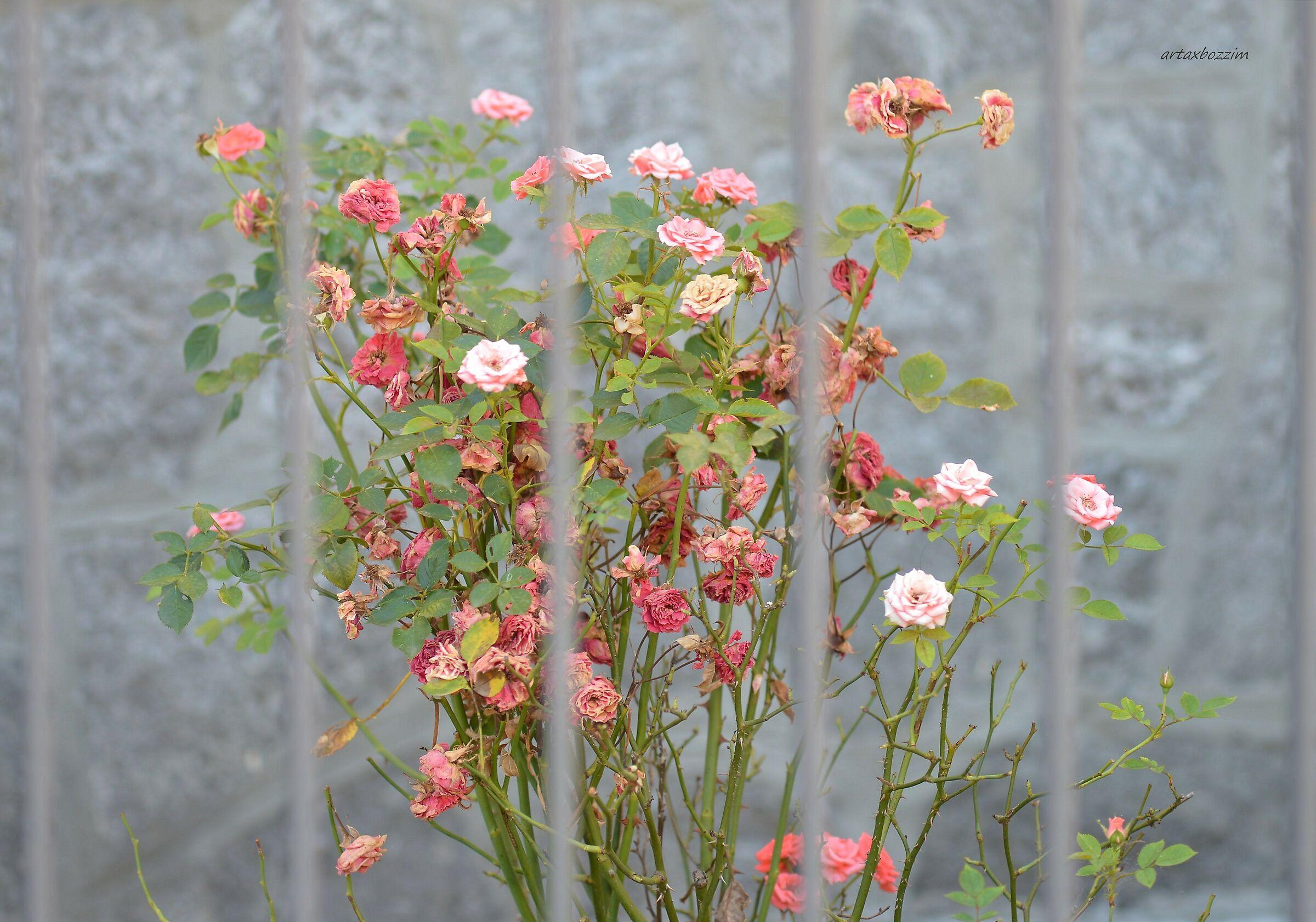 autumn poem of a pink seedling...