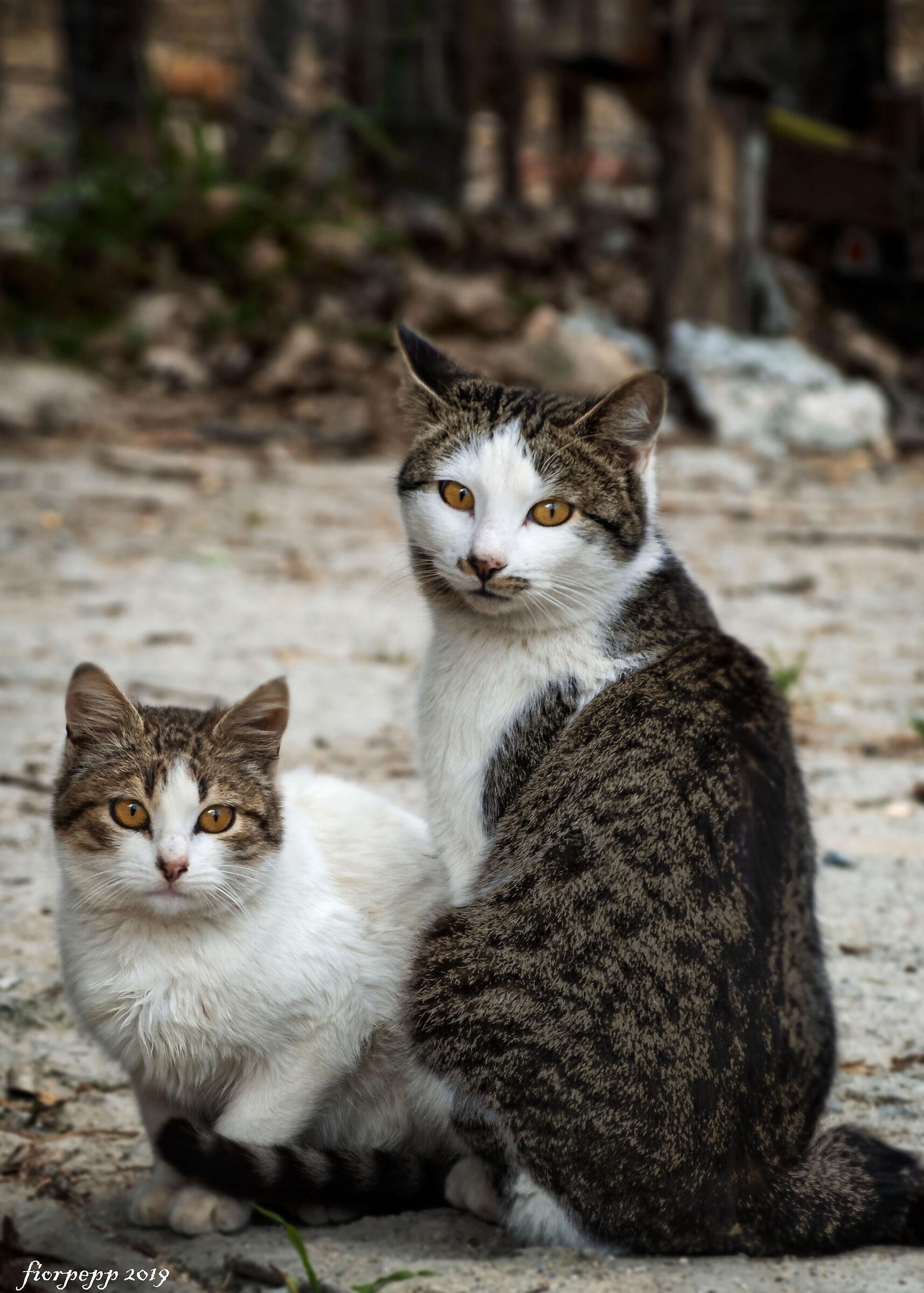 Cats ...