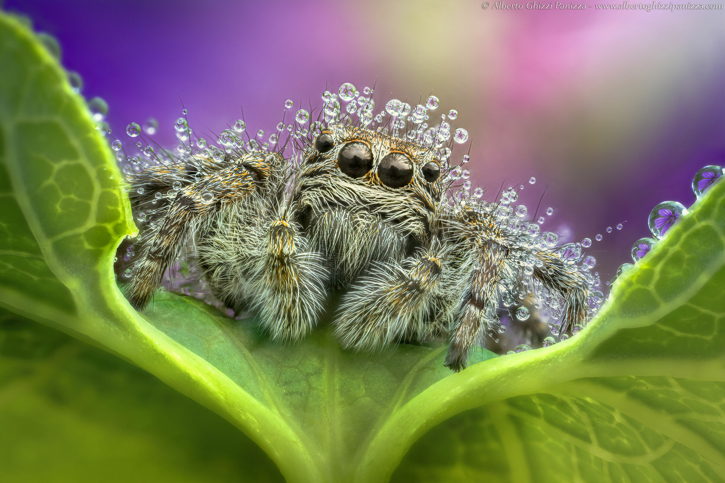 With rain even spiders have their own problems...