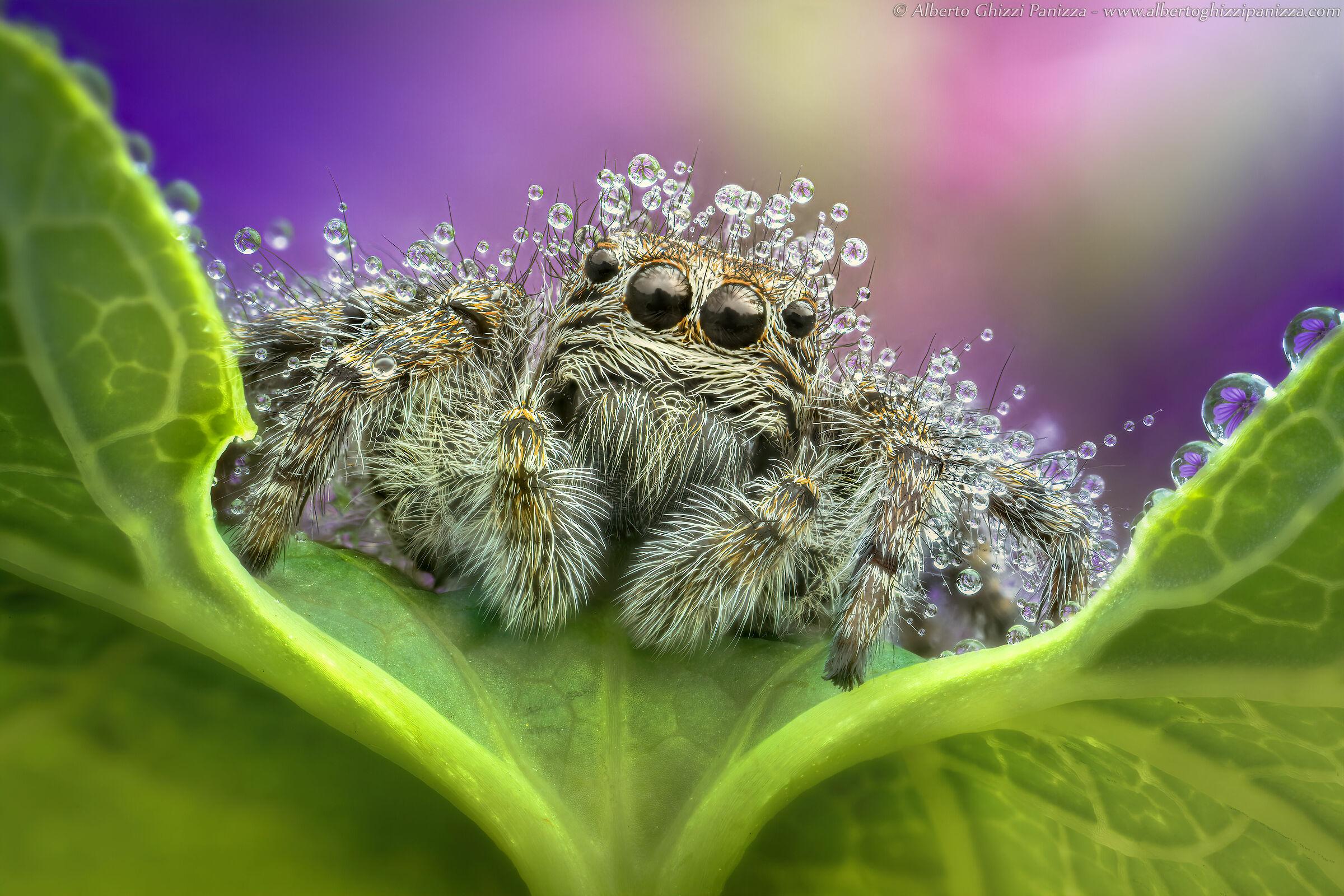 Con la pioggia anche i ragni hanno i loro problemi...