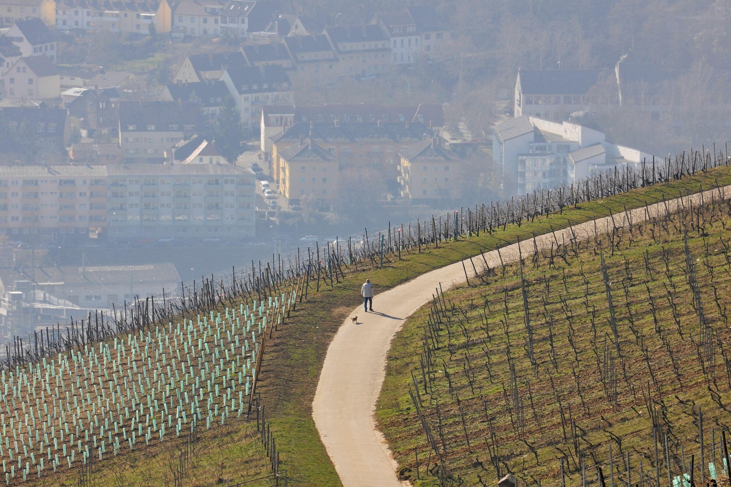 Walking the Dog; Rhine Valley, Rüdesheim, Germany...