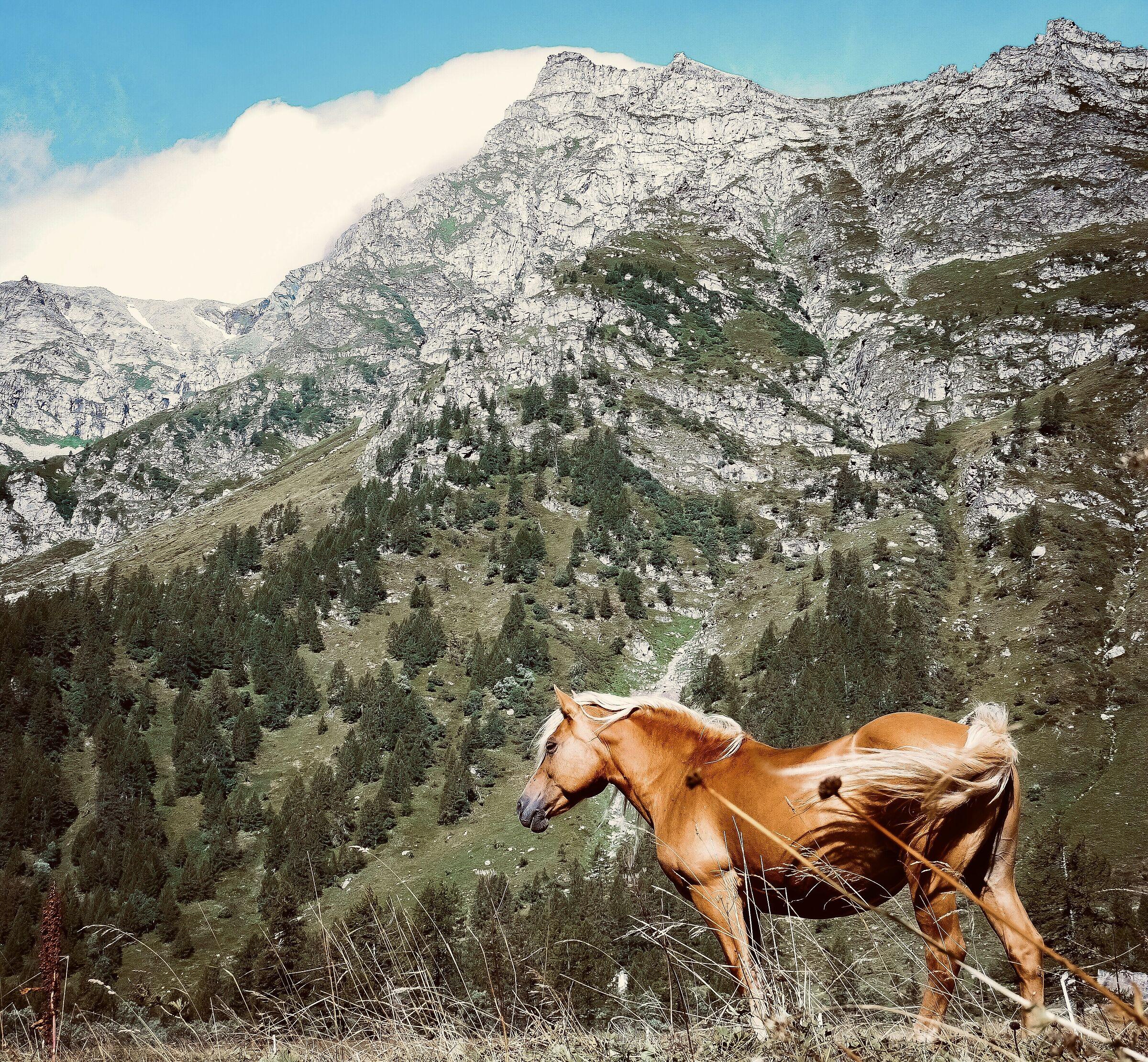 Windy horse...