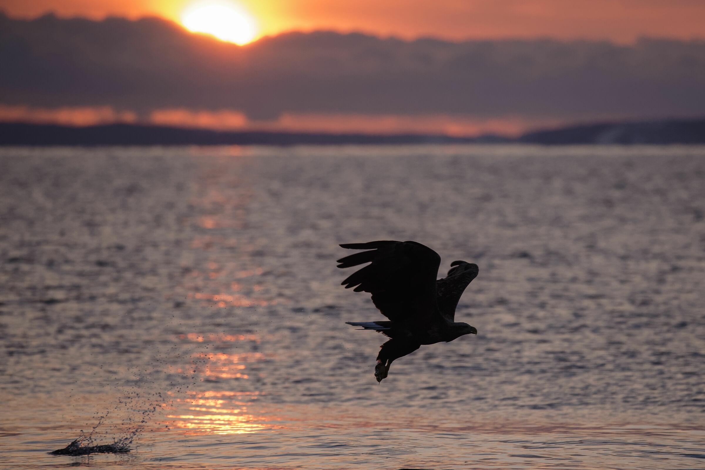fishing at dawn...