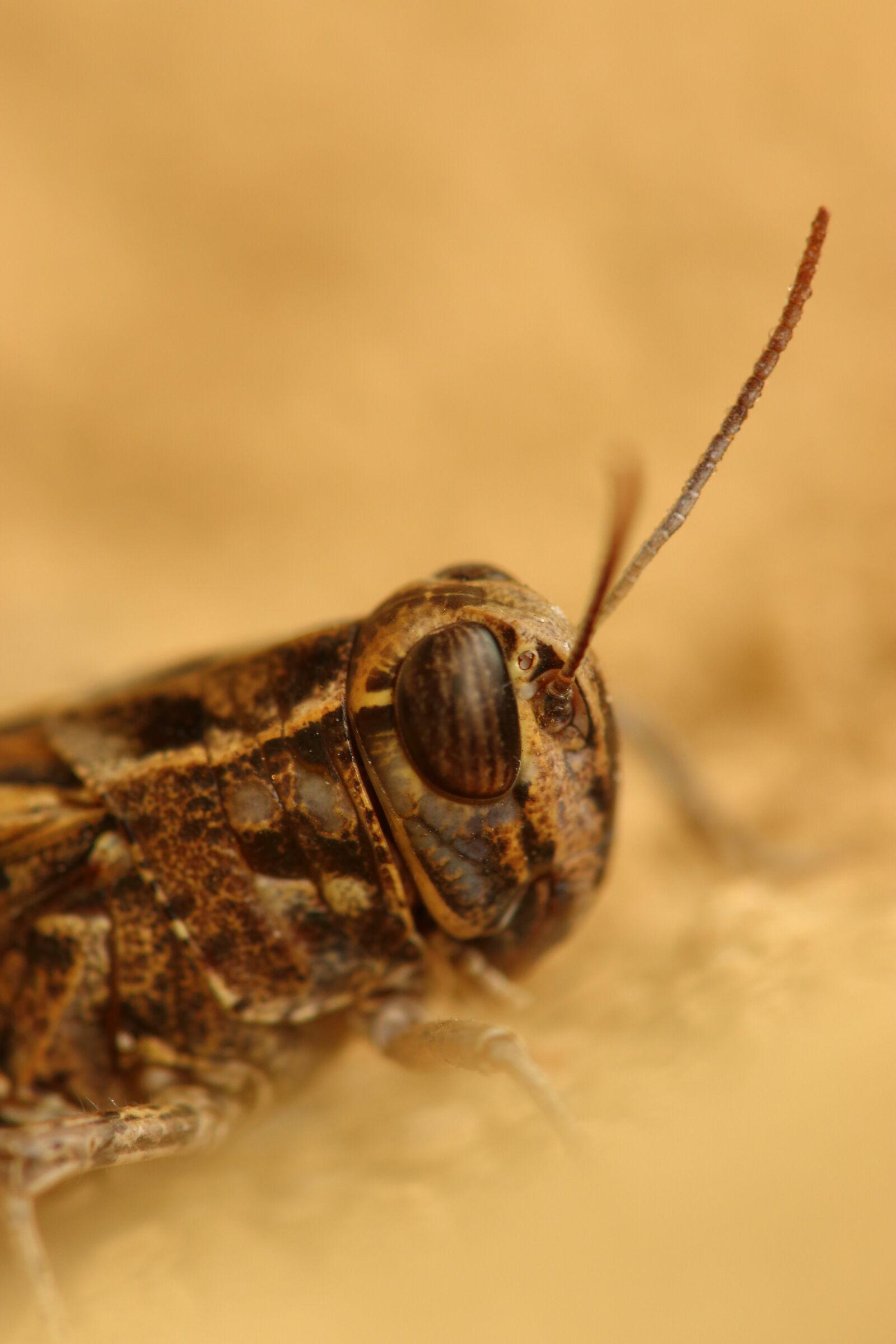 Eye of cricket...