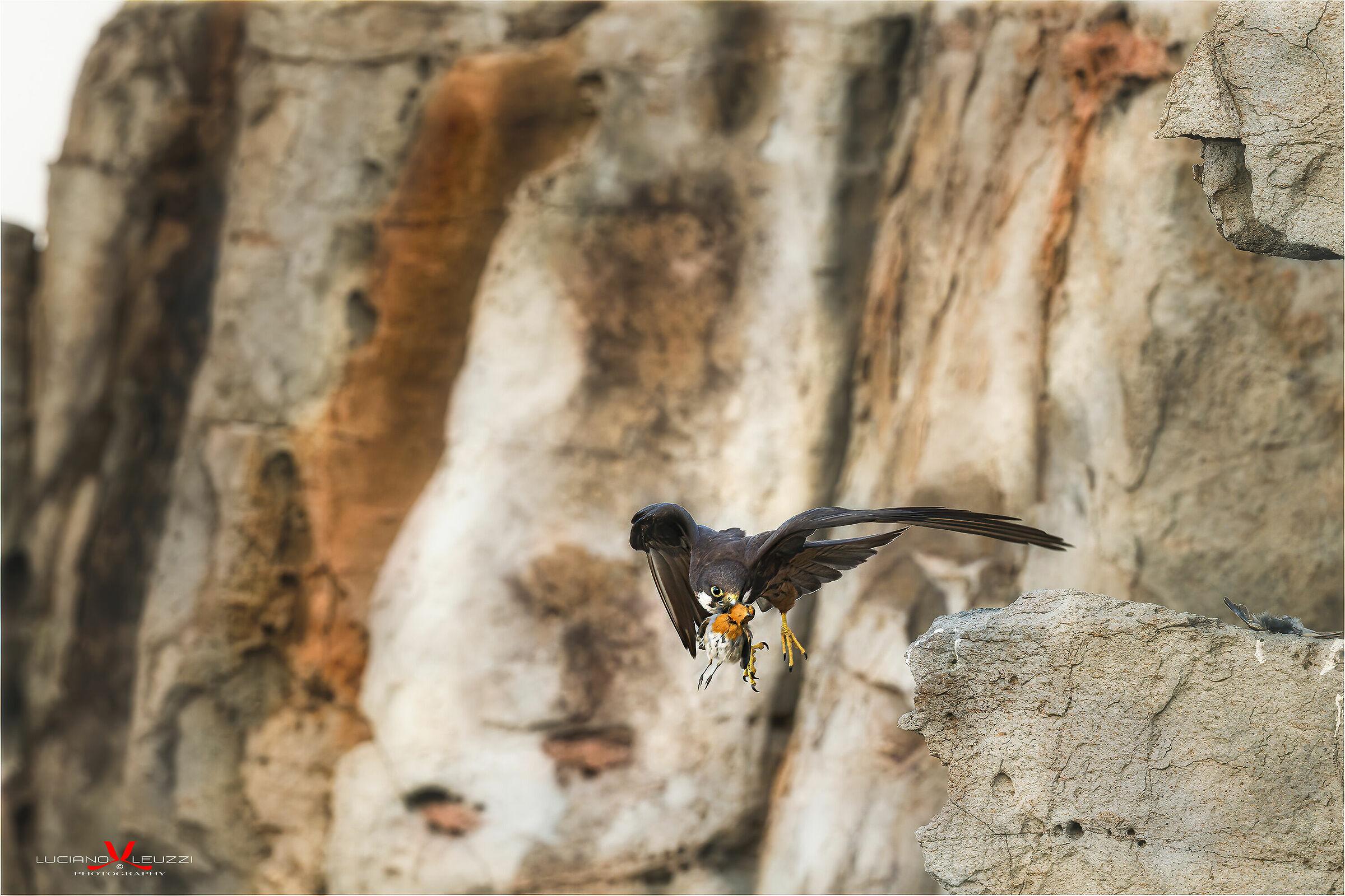 Queen's Hawk (Eleanor Falcon)...
